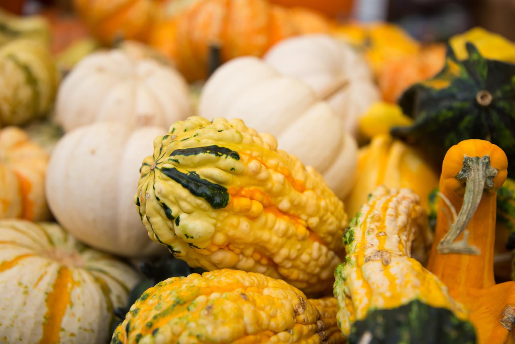Gourds at The Western North Carolina Farmers Market