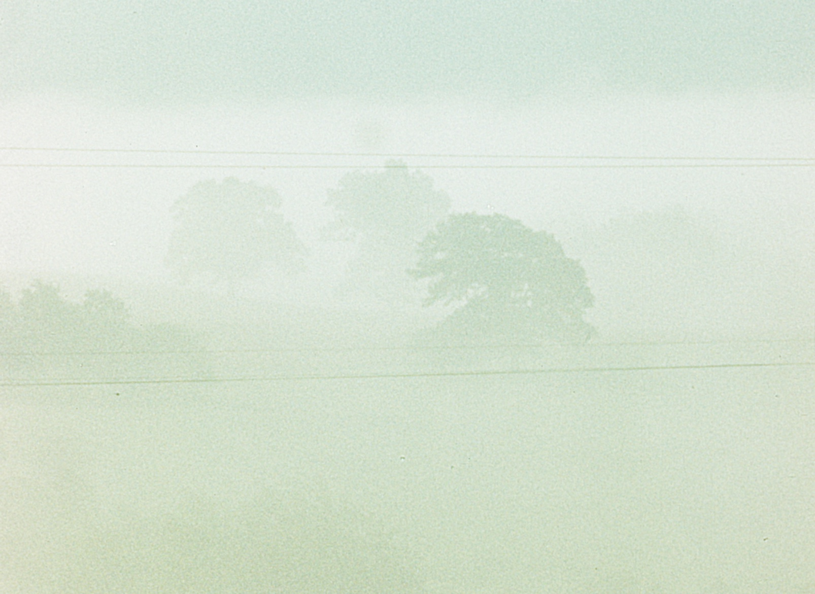 Fog Line.jpeg