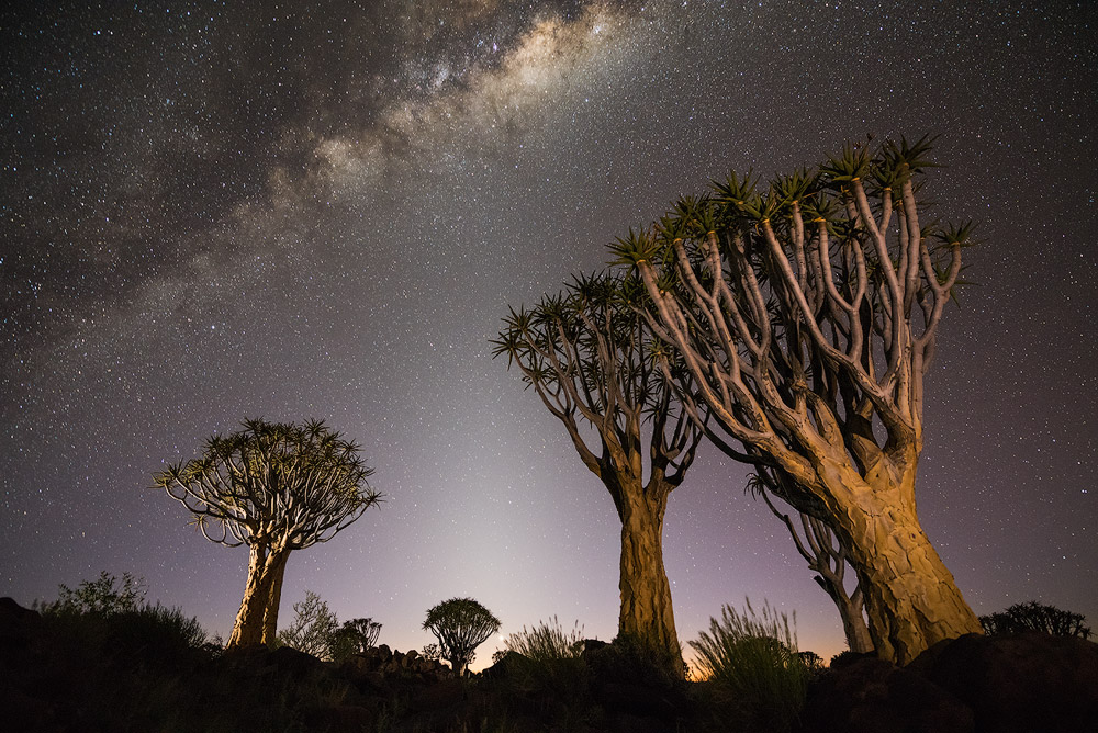 """Balance Of Light"" - Quiver Tree Forest, Keetmanshoop, Namibia  Three forms of light balance together to create this photograph. Starlight, astronomical twilight and artificial light. The Quiver Trees are composed as if reaching up to the most fascinating form of light, the Milky Way. The challenge was to perfectly balance all three forms of light into a pleasing photograph."