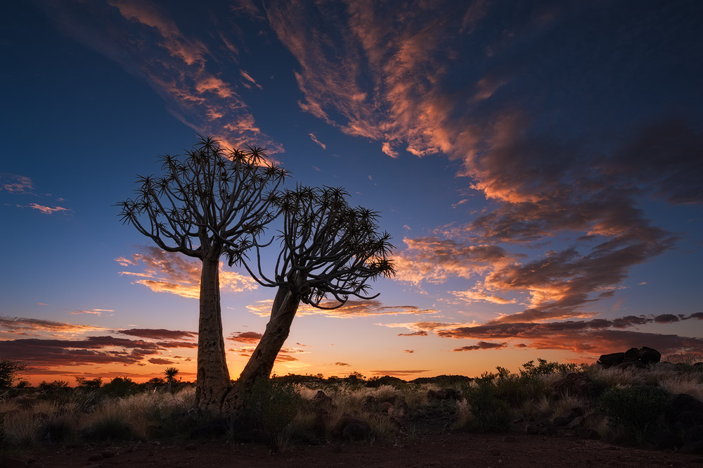 """Sunset over Keetmanshoop"" - Quiver Tree Forest, Keetmanshoop, Namibia  Sunset falls across the barren but beautiful Quiver Tree landscape of Namibia."