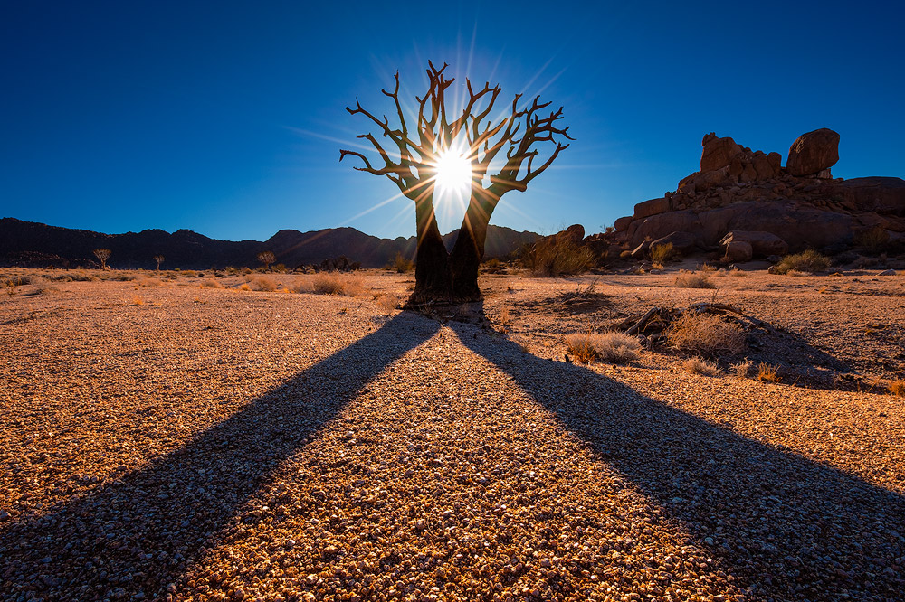 """Twin Kokerboom"" - Richtersveld National Park, Northern Cape, South Africa  A Twin Kokerboom creates symmetrical shadows on the arid land of the Richtersveld National Park in the Northern Cape region of South Africa."