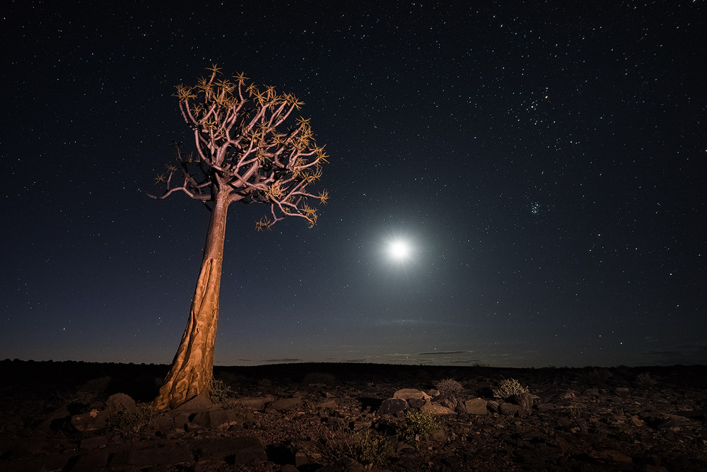 """On The Fringe Of Darkness"" - Fish River Canyon, Hobas, Namibia  The moon reaches the horizon to the west, setting and bringing complete darkness to the arid and desolate landscape of the Fish River Canyon. A lone Quiver Tree stands alone in this harsh environment."