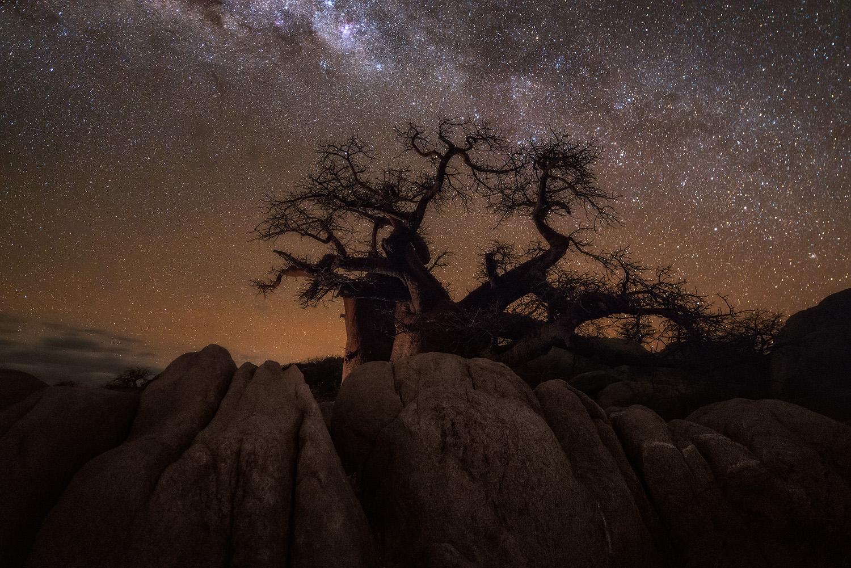 Copy of Mysterious Nocturnal Landscape