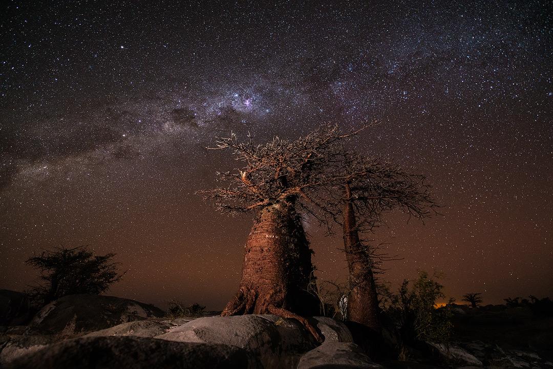Copy of The Baobab Way