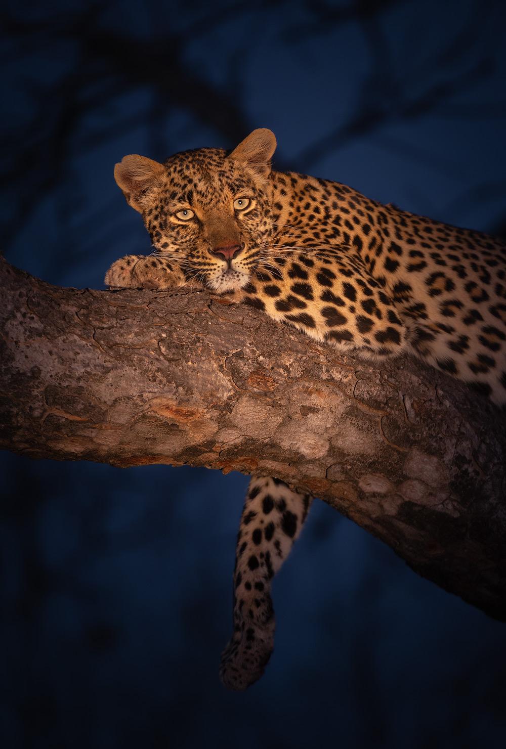 Resting Queen