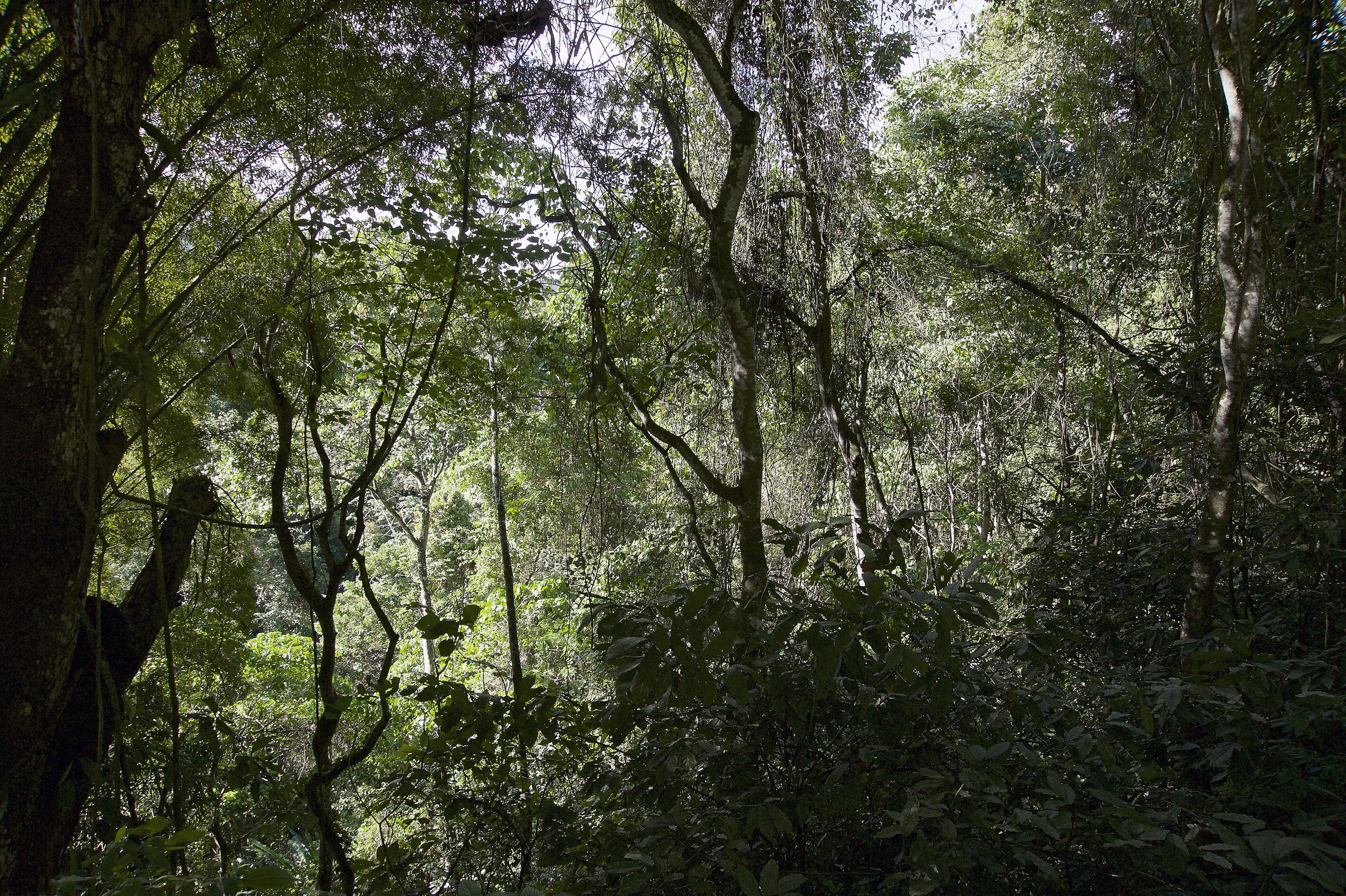 Dschungel_DSC5107.jpg