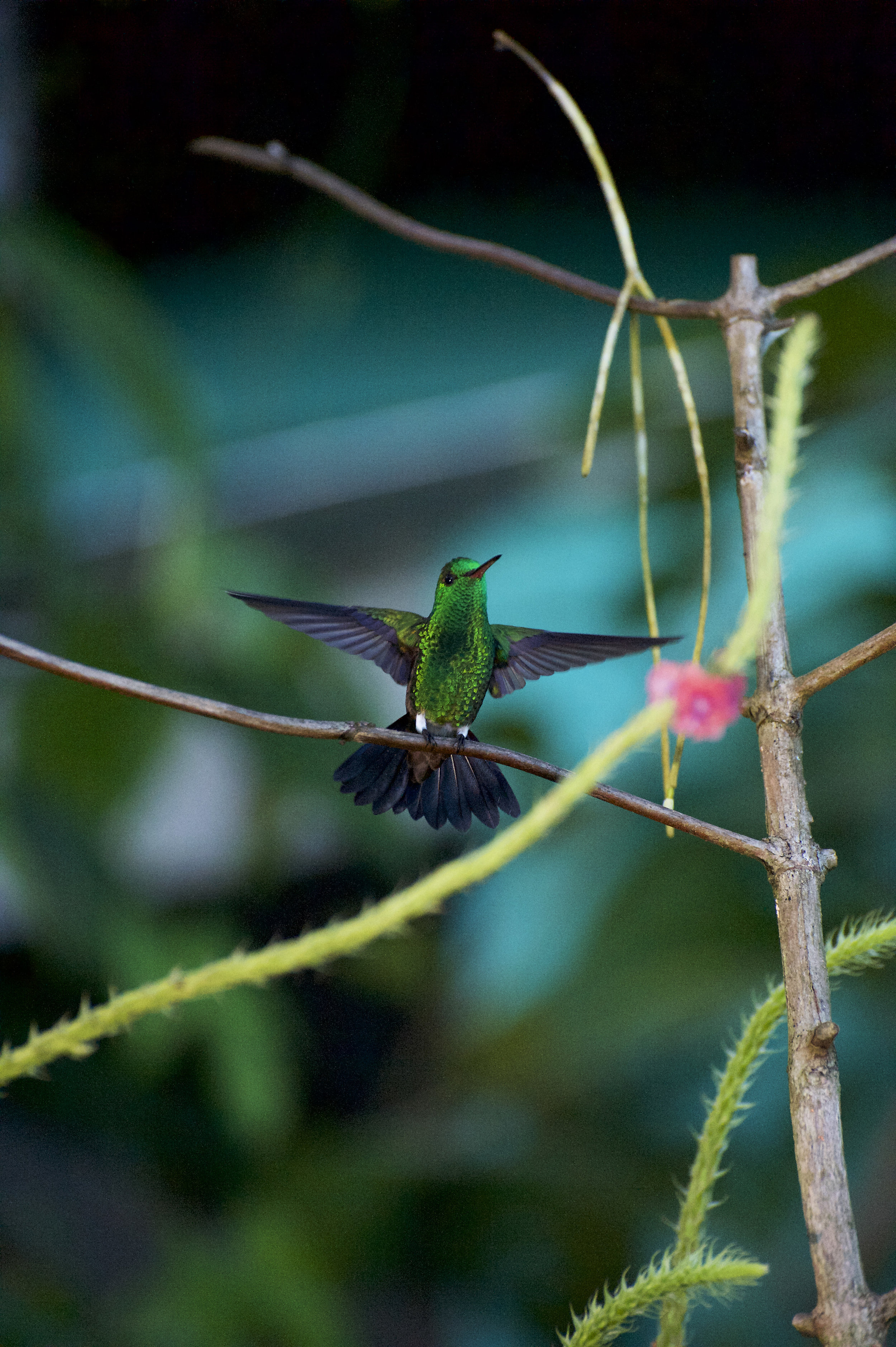 Kolibri_DSC5215.jpg
