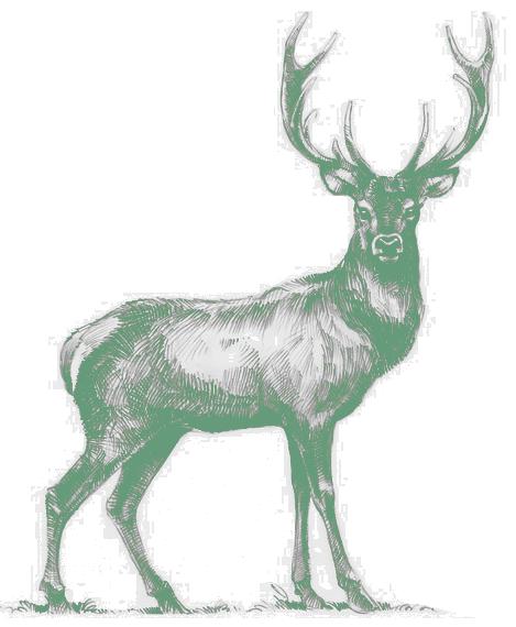 deer_green.png