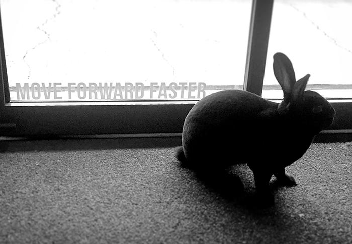 Flash the Bunny_small file.jpg