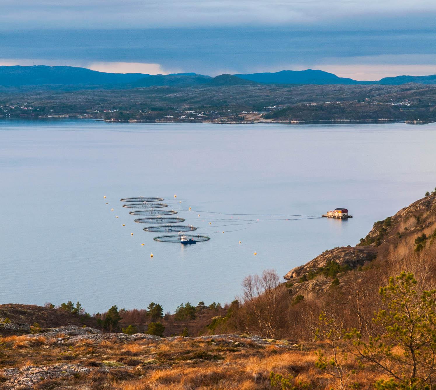fjellværøya-3111.jpg