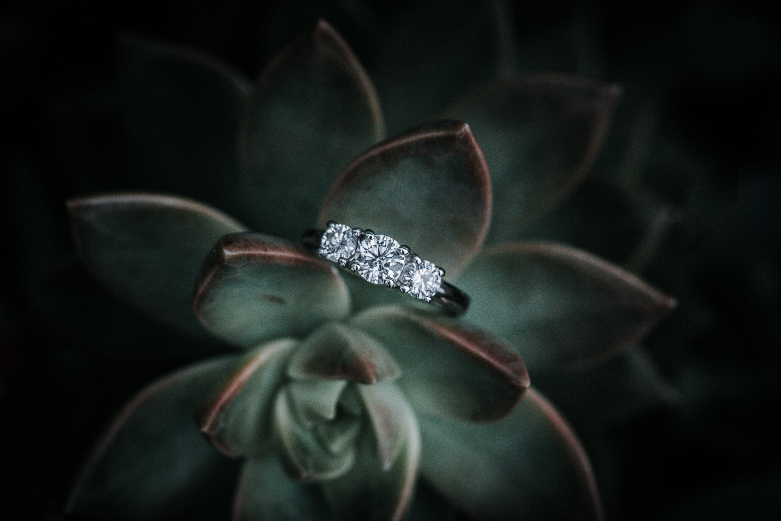 engagement-wedding-ring-photos.jpg