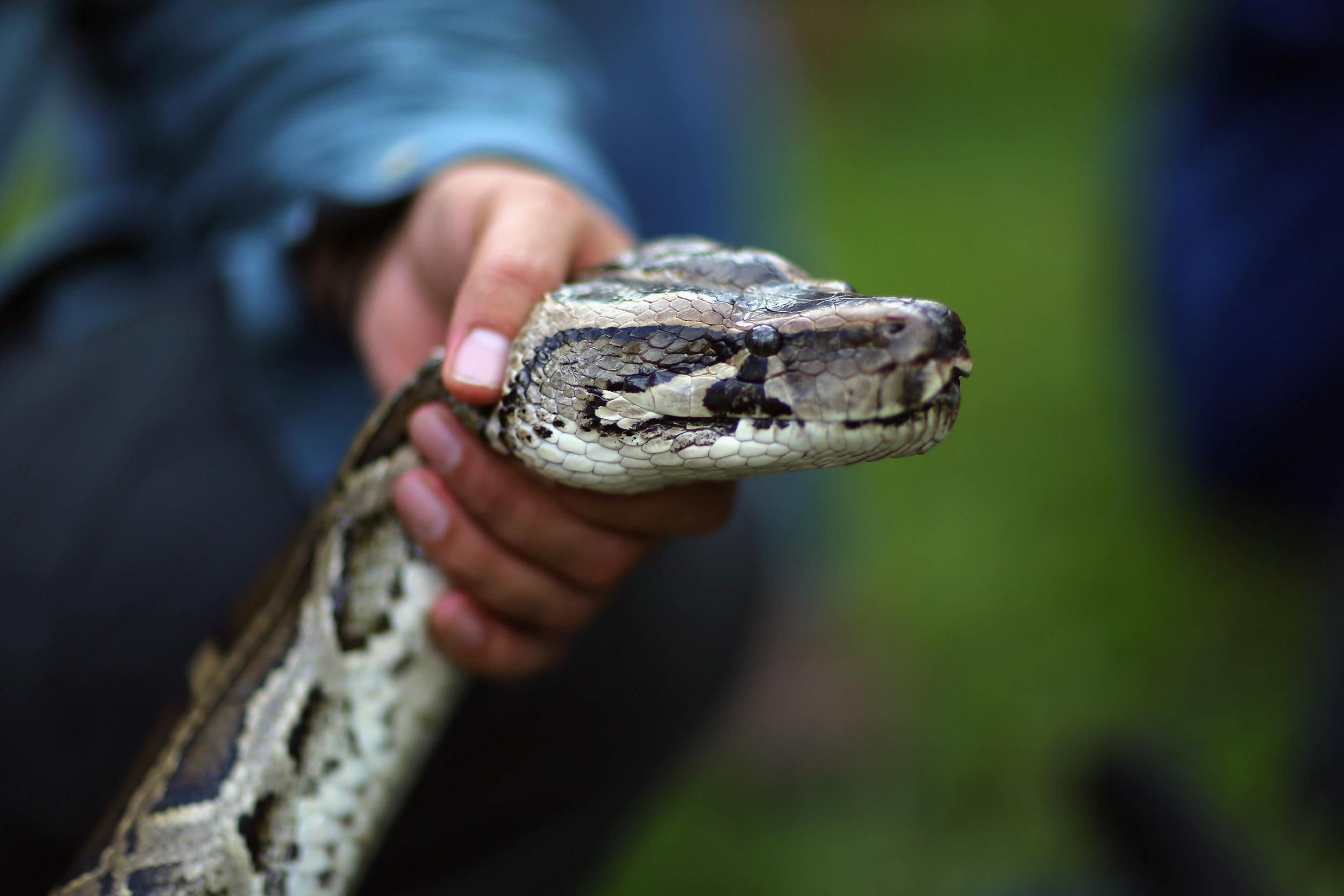 snakehead.jpg