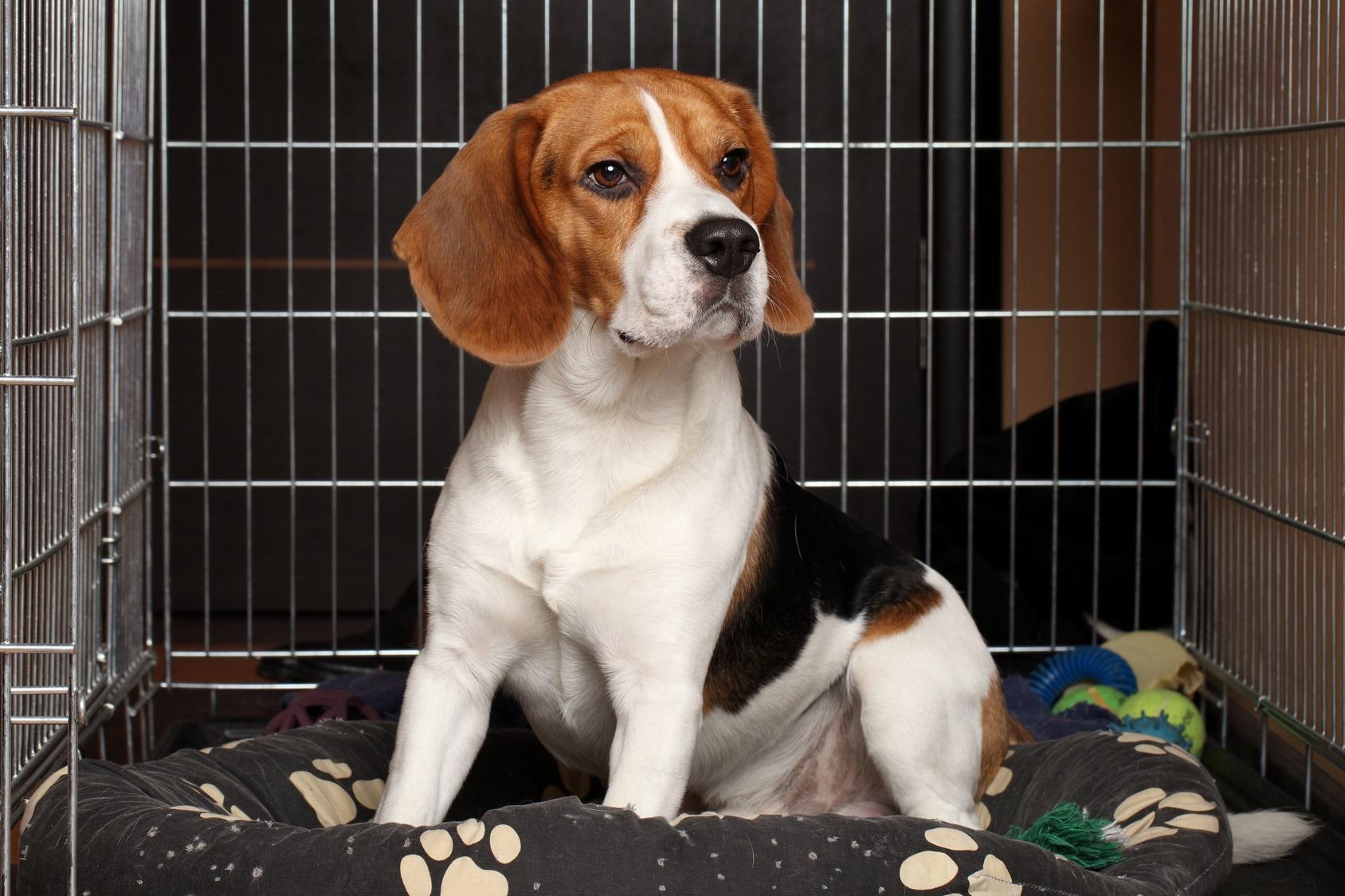 dog in a crate.jpg
