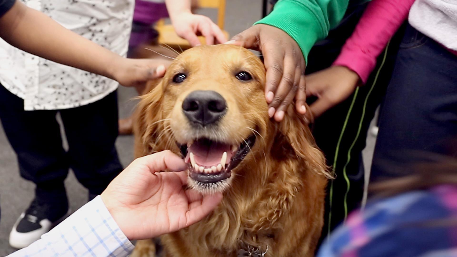 x_tdy_ov_pets_hugging_dog_170228_tease-01.jpg