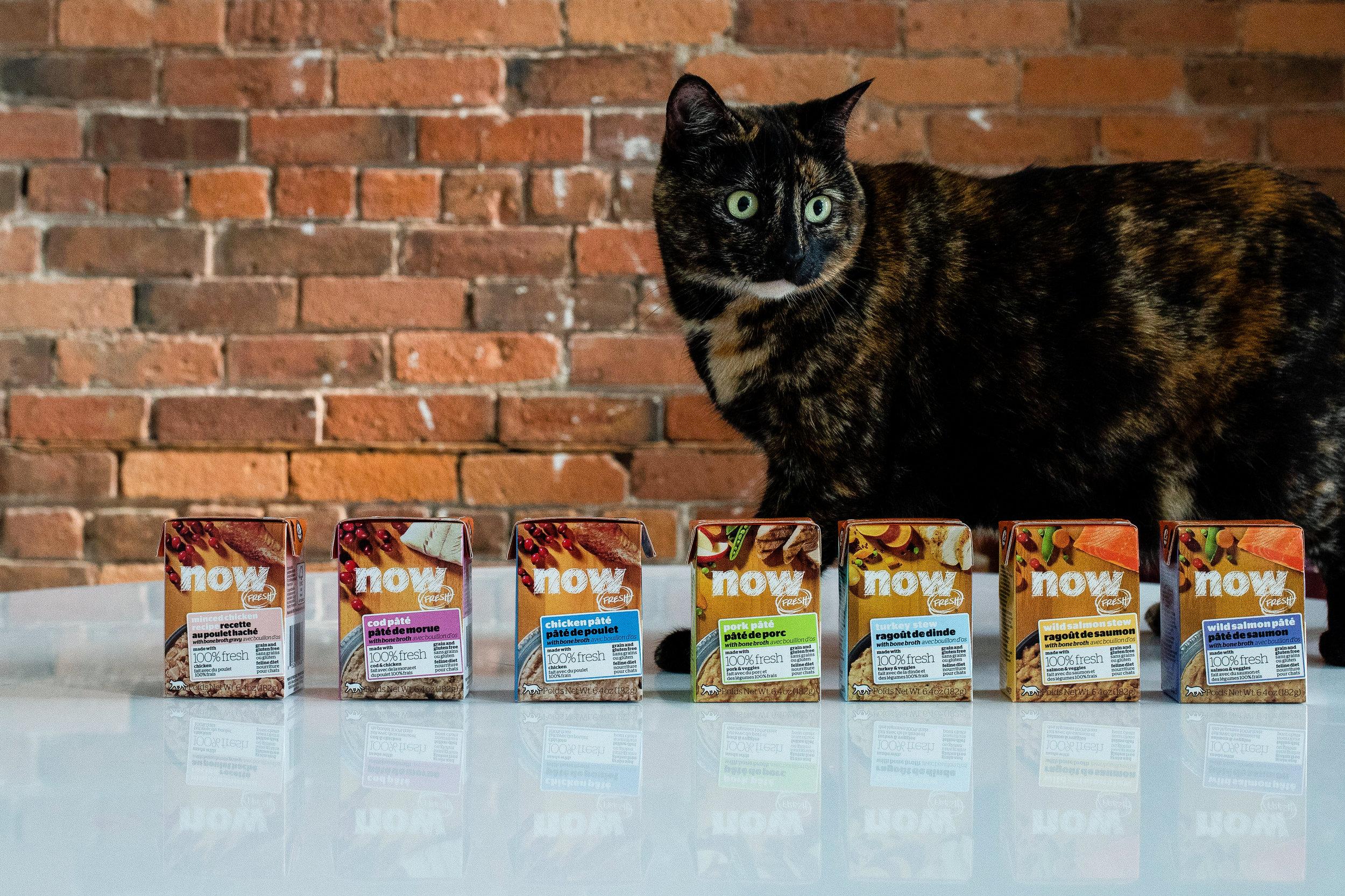 Petcurean-Brief-2-Cats-45 copy.jpg
