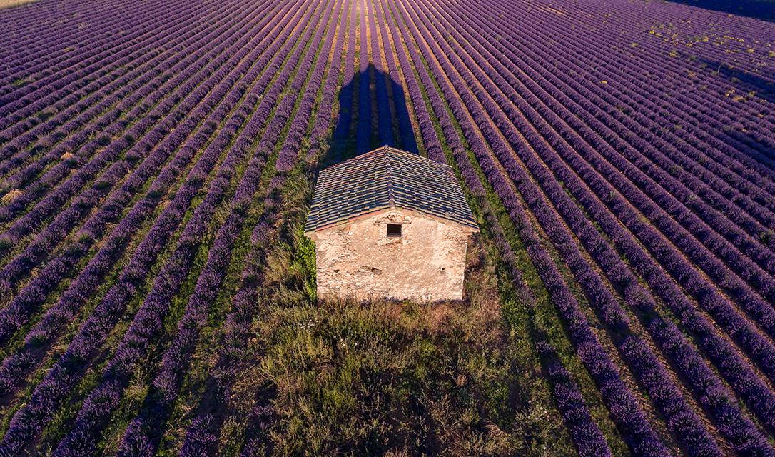 Lavender Farm & Distillery - SIMIANE-LAROTONDE, FRANCE