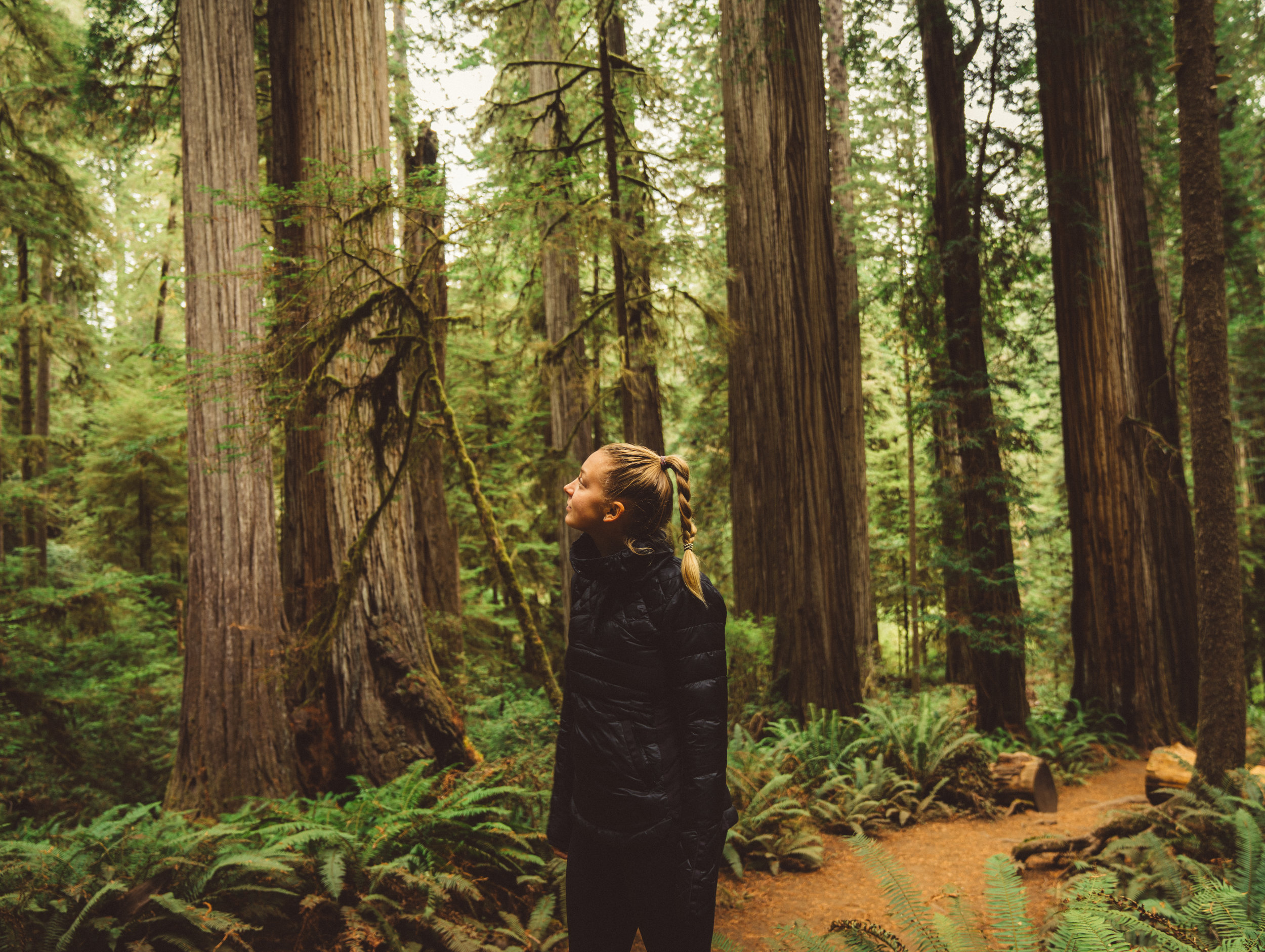 Danielle absorbing the Redwoods at Jedediah Smith Redwoods State Park.