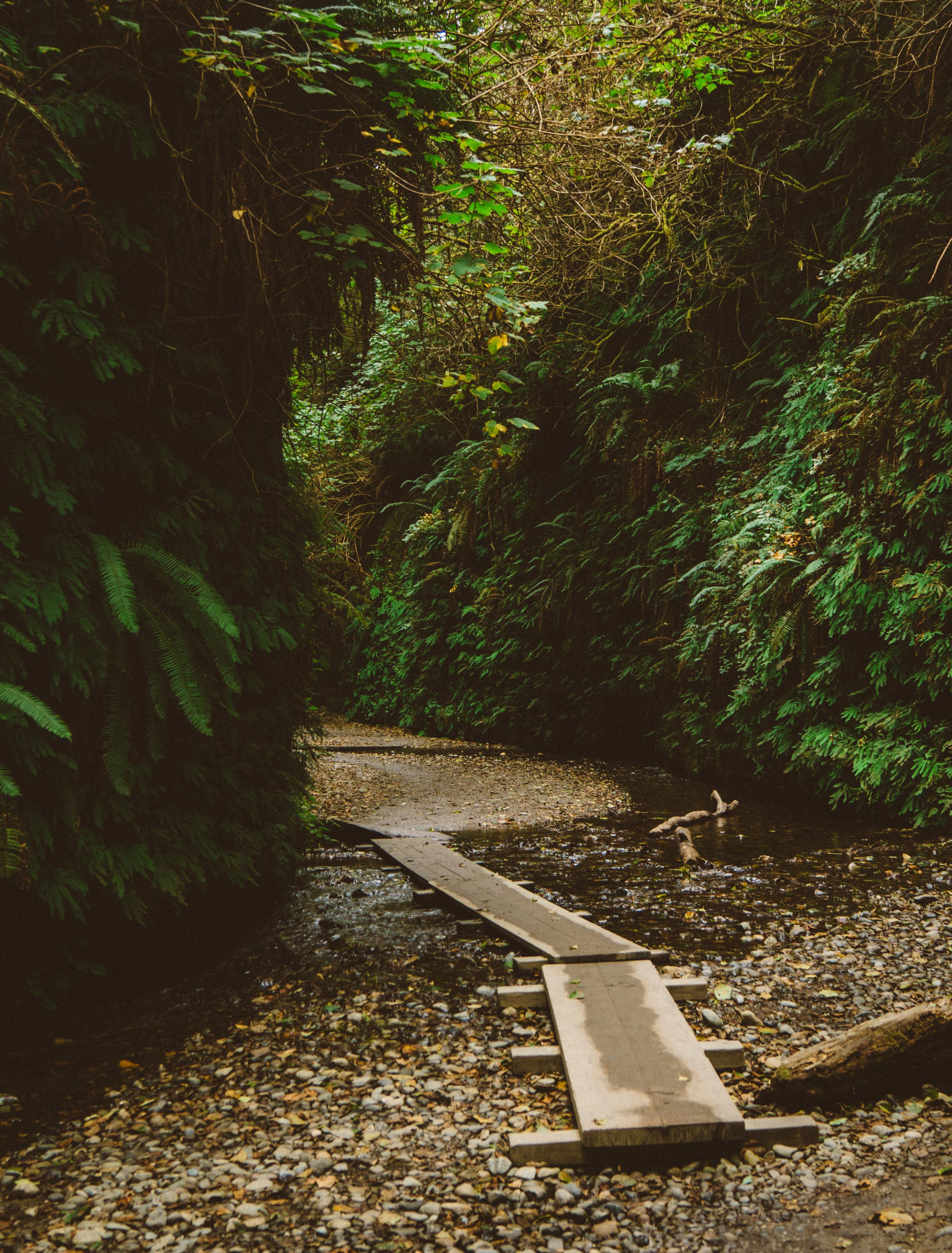 Fern Canyon.