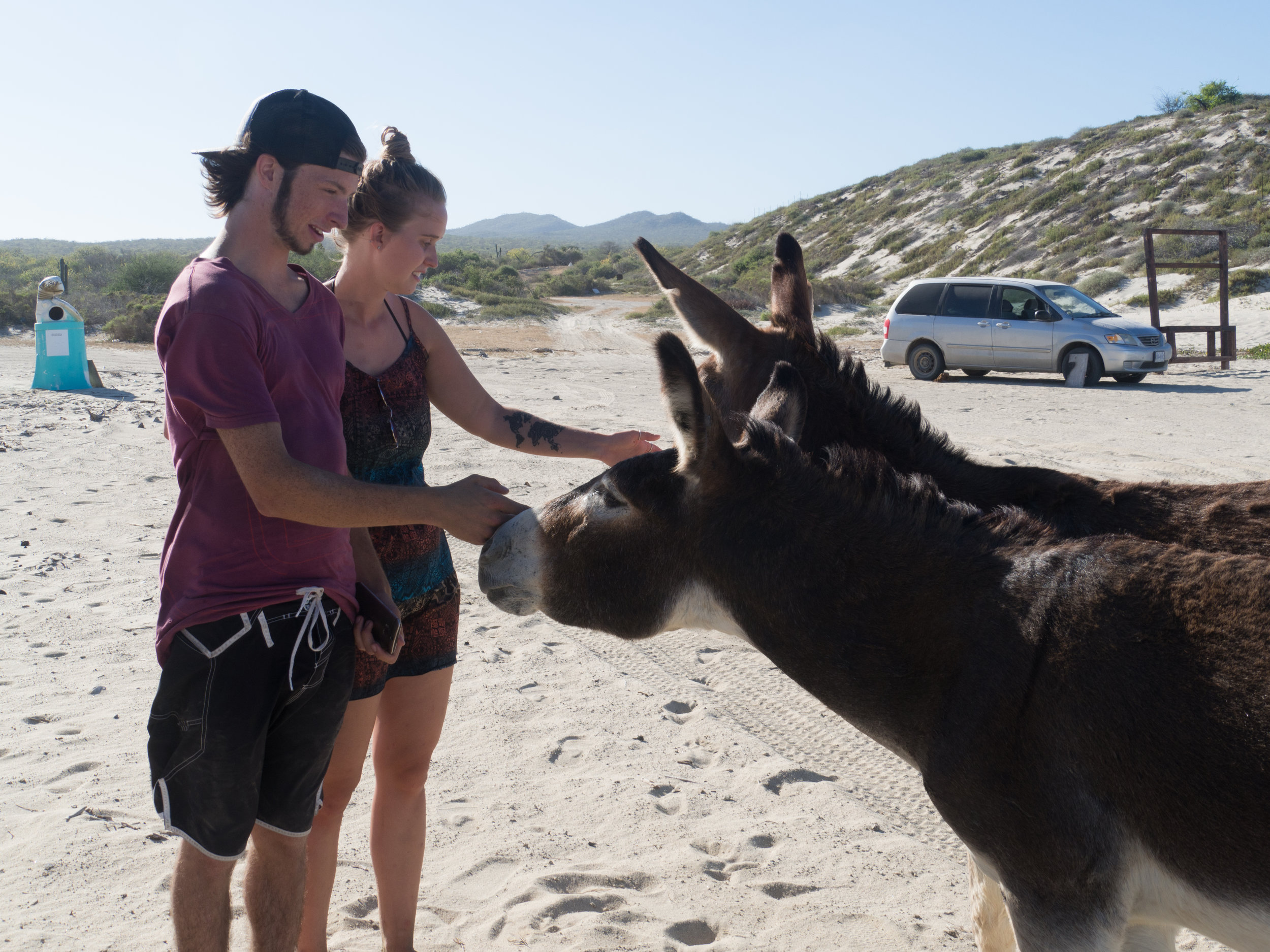 Bonus Photo: MinEssa greet two beach donkeys at our camp spot in  Cabo Pulmo . Photo Credit:  Danielle Seeliger .