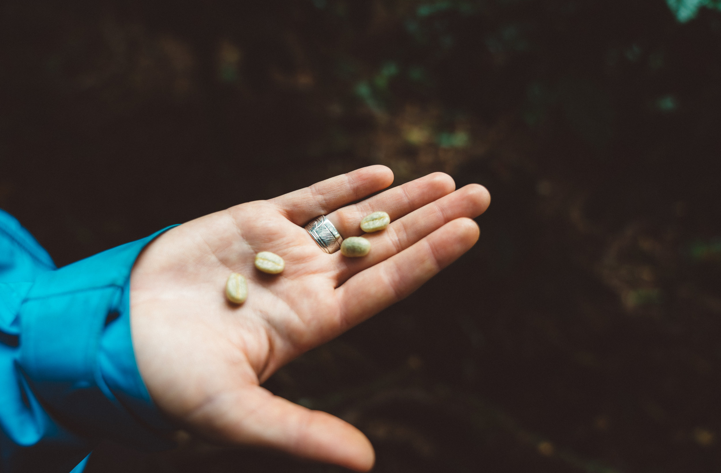 The beans in their completely un-dried form, straight out of their berry shell. They come out of the first shell covered in a translucent, slimy layer which is sweet to the taste.
