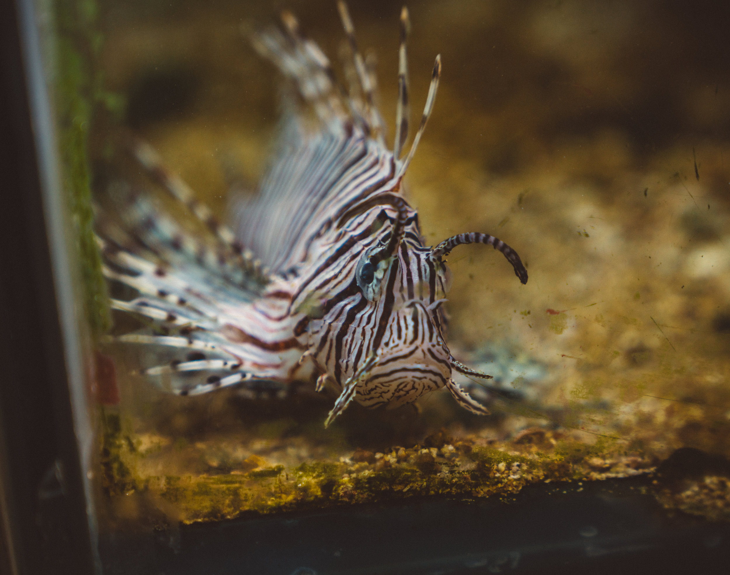 Lion fish, I think, at the Smithsonian.