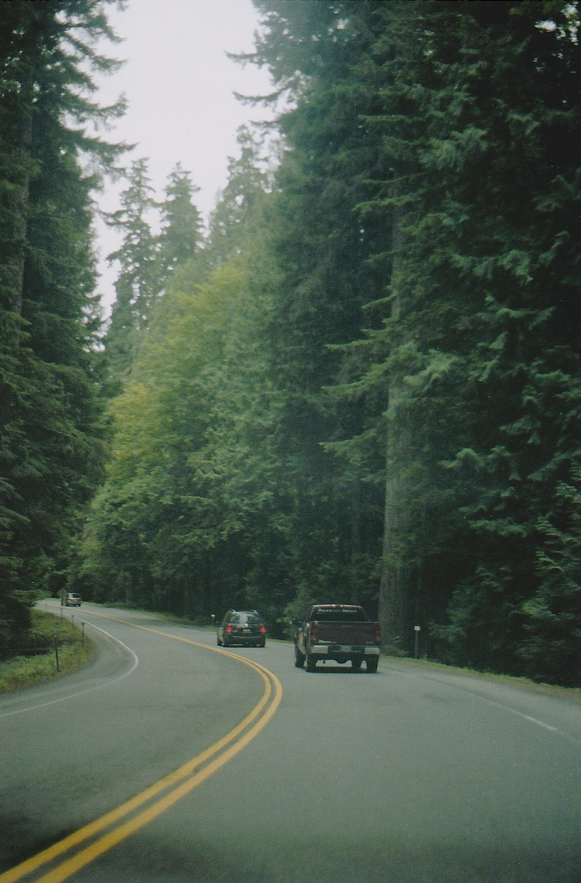 Driving through Cathedral Grove.