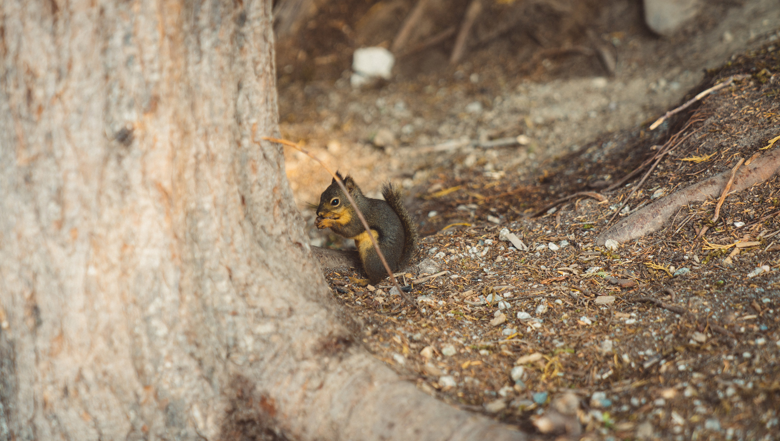 These little chipmunks (or is this a red squirrel?) were everywhere scrounging for scraps.