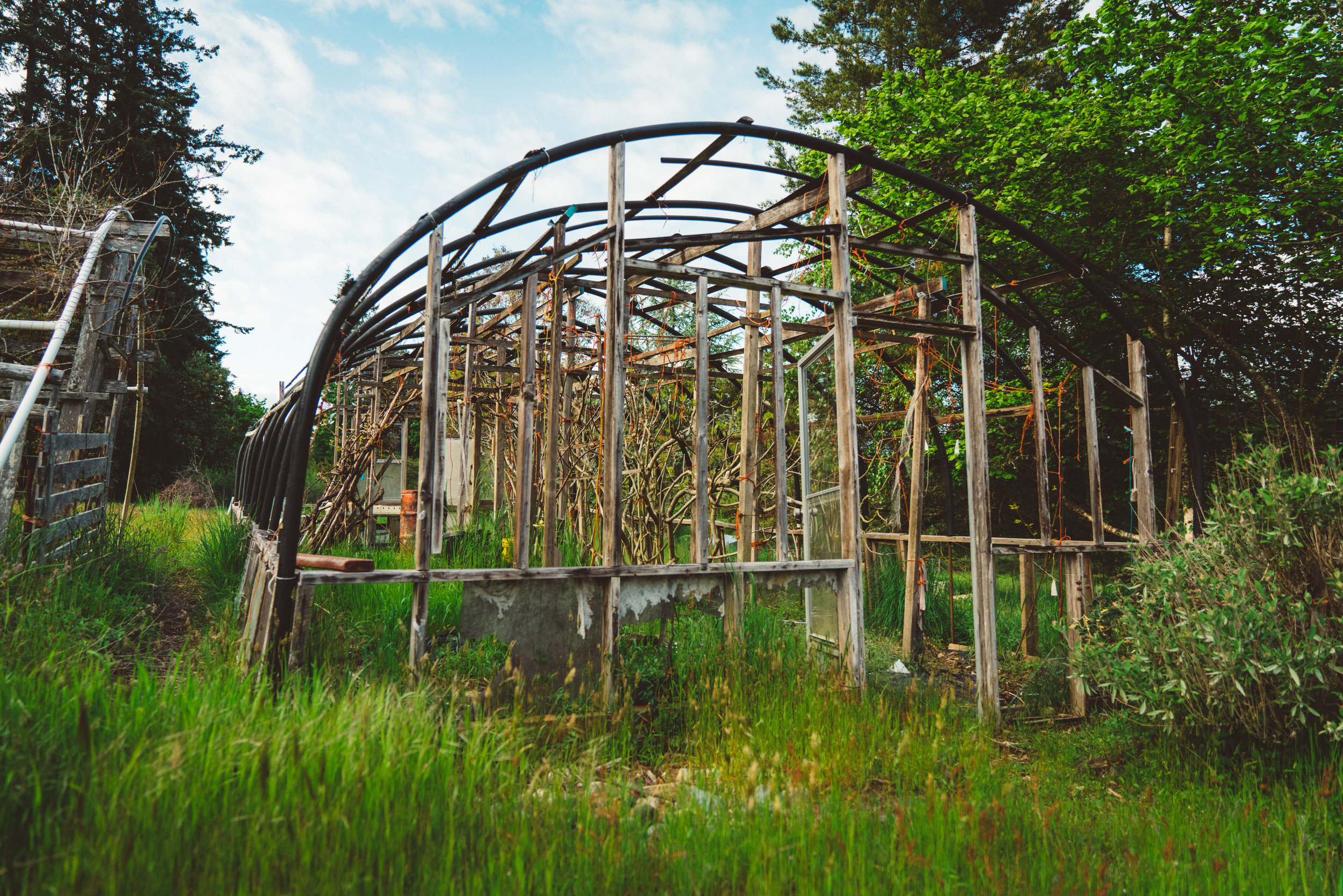 Old greenhouses collapsing in the field.