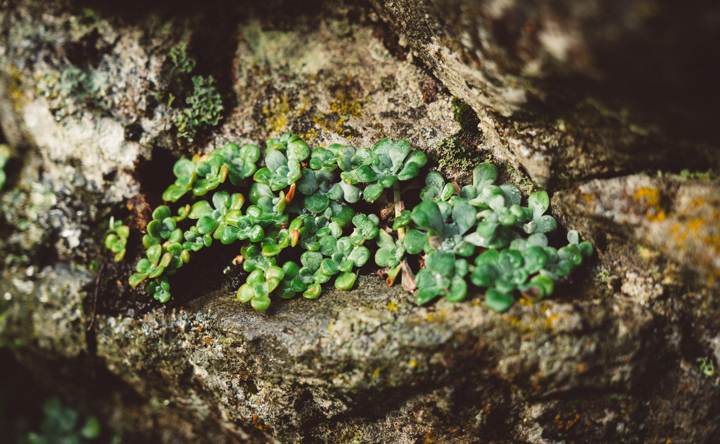 Plants of Mt. Doug.