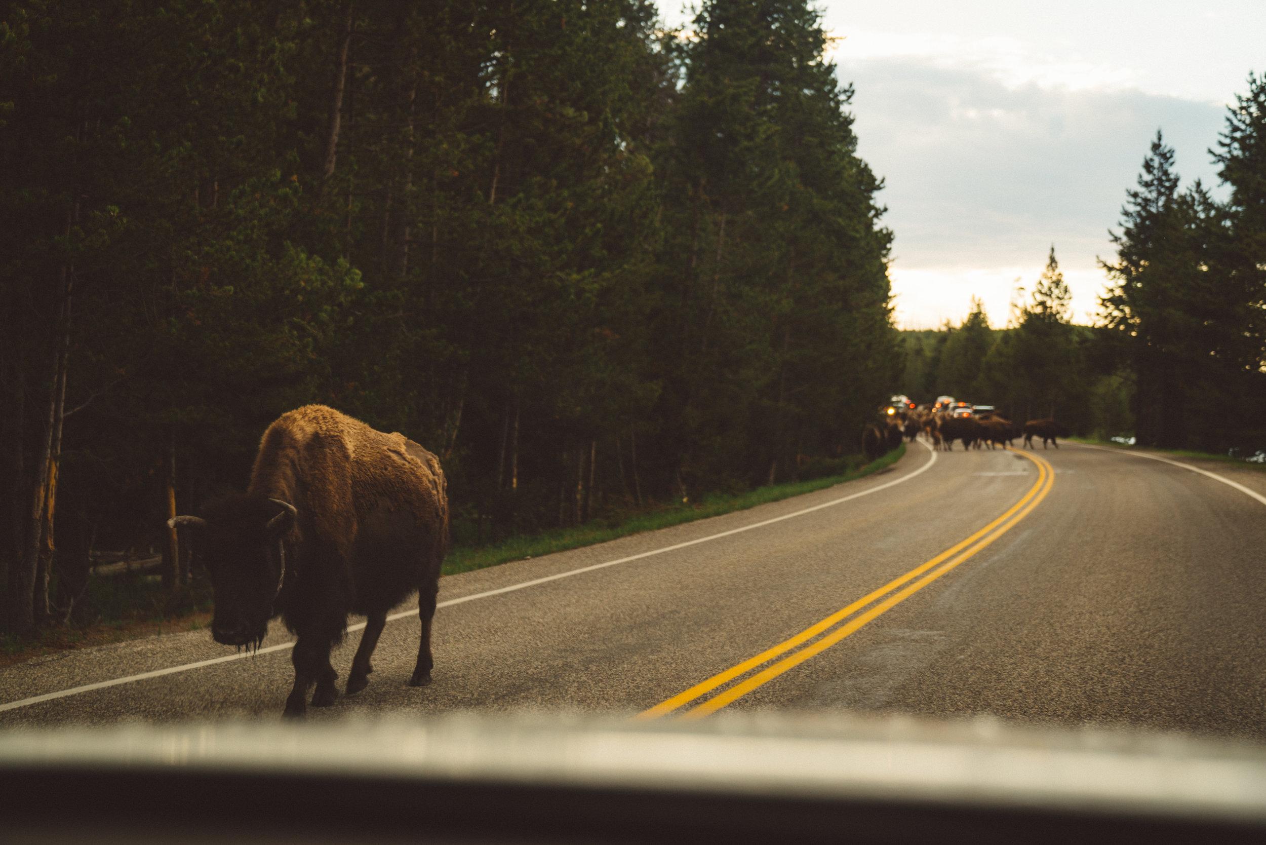 The traffic jam begins.