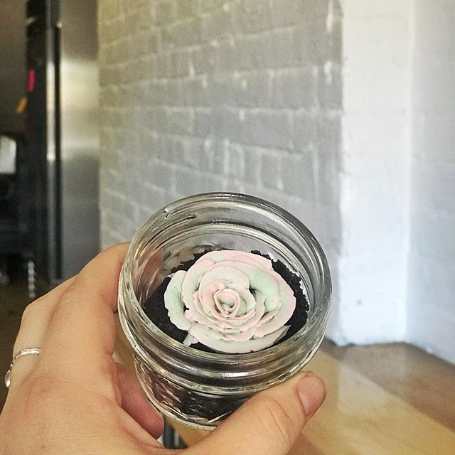 Swooning over these succulent🌵 cake jars ... and a sneak peak of the new kitchen 😳