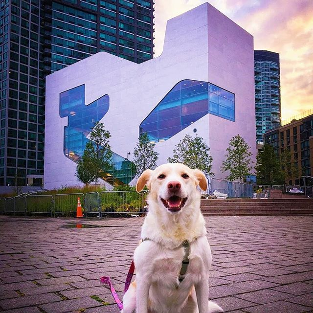 Who likes to read??!!! 'Cause it looks like the Library 📚 is almost done!!! 🤓🐾 . . . . Credit: @the_daily_hayley  #gantrygram #nyc #lic #gantryplazastatepark #library #dogsofnyc #dogsofinstagrams