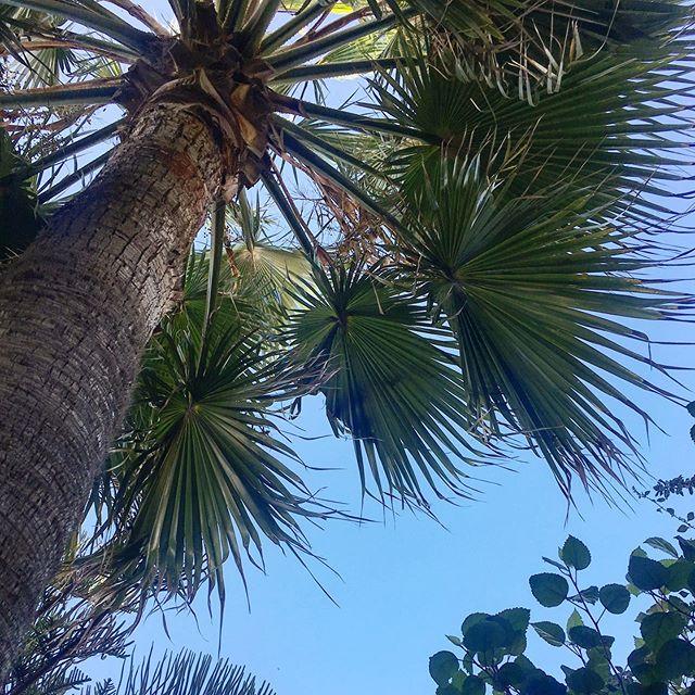 #vert . Sous les palmiers la plage