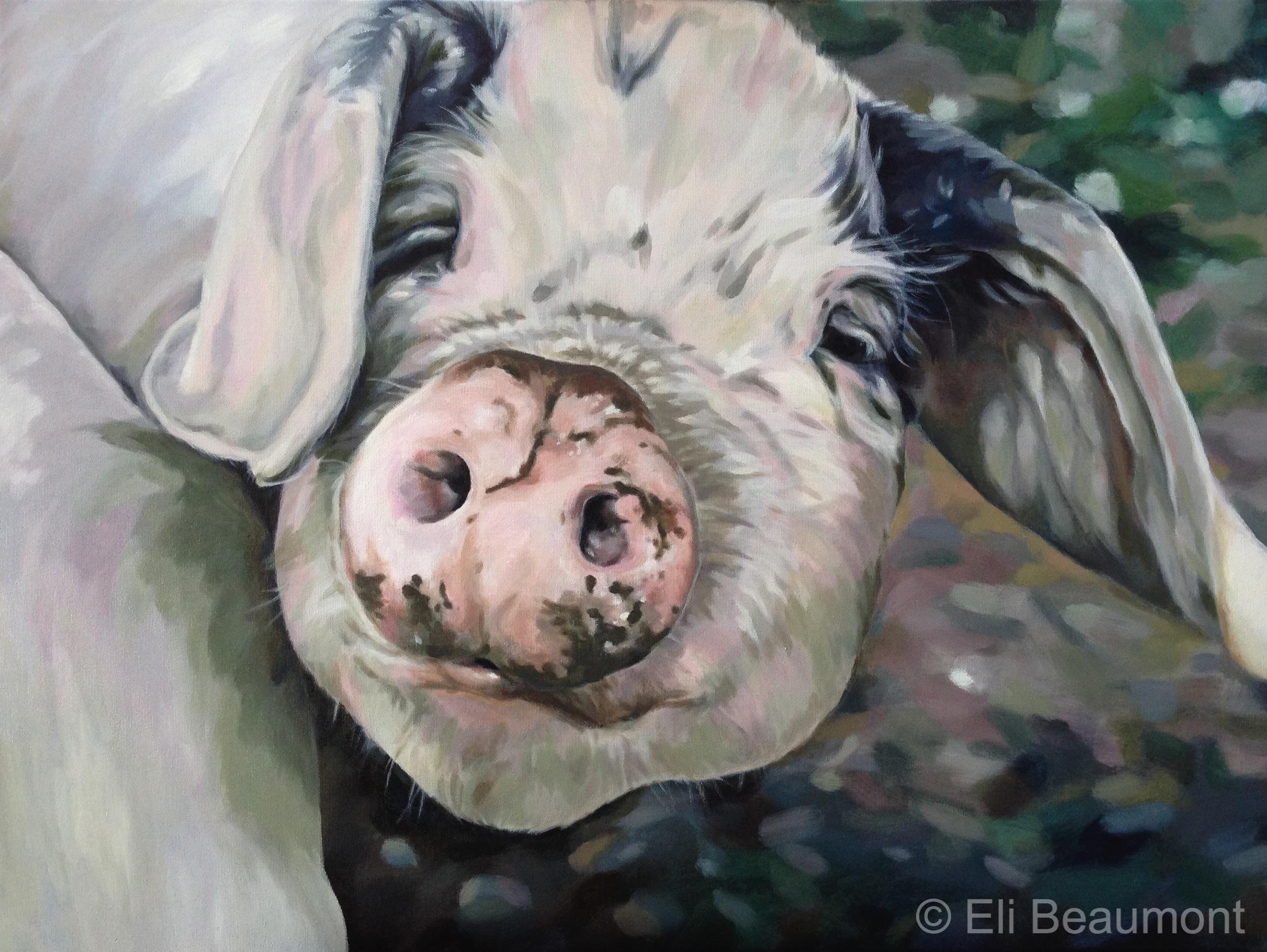 Pig - oil on canvas  80x60cm