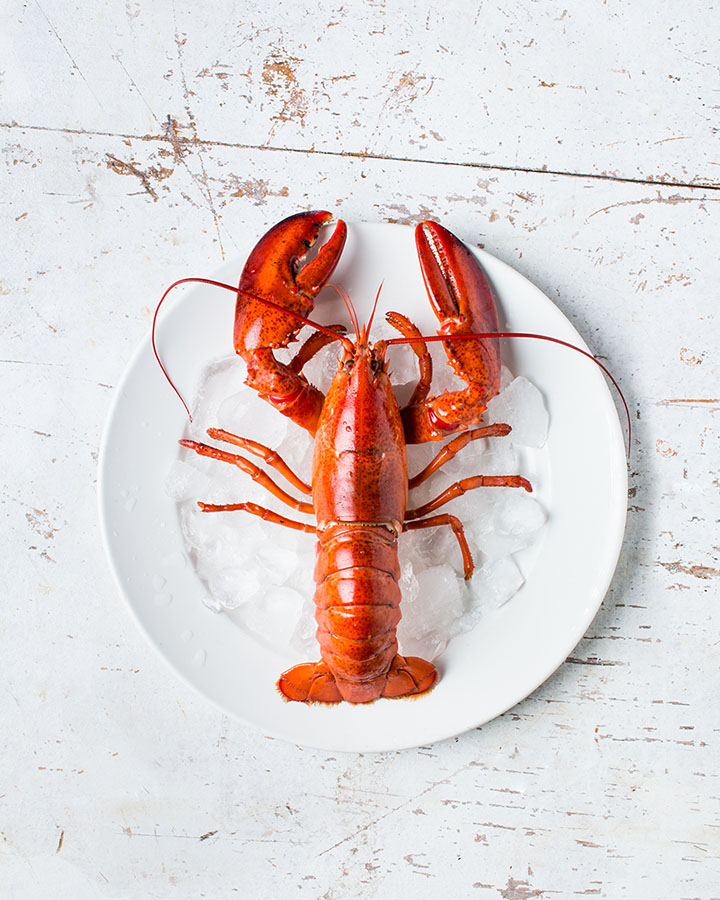 Adobe Stock Premium - Lobster