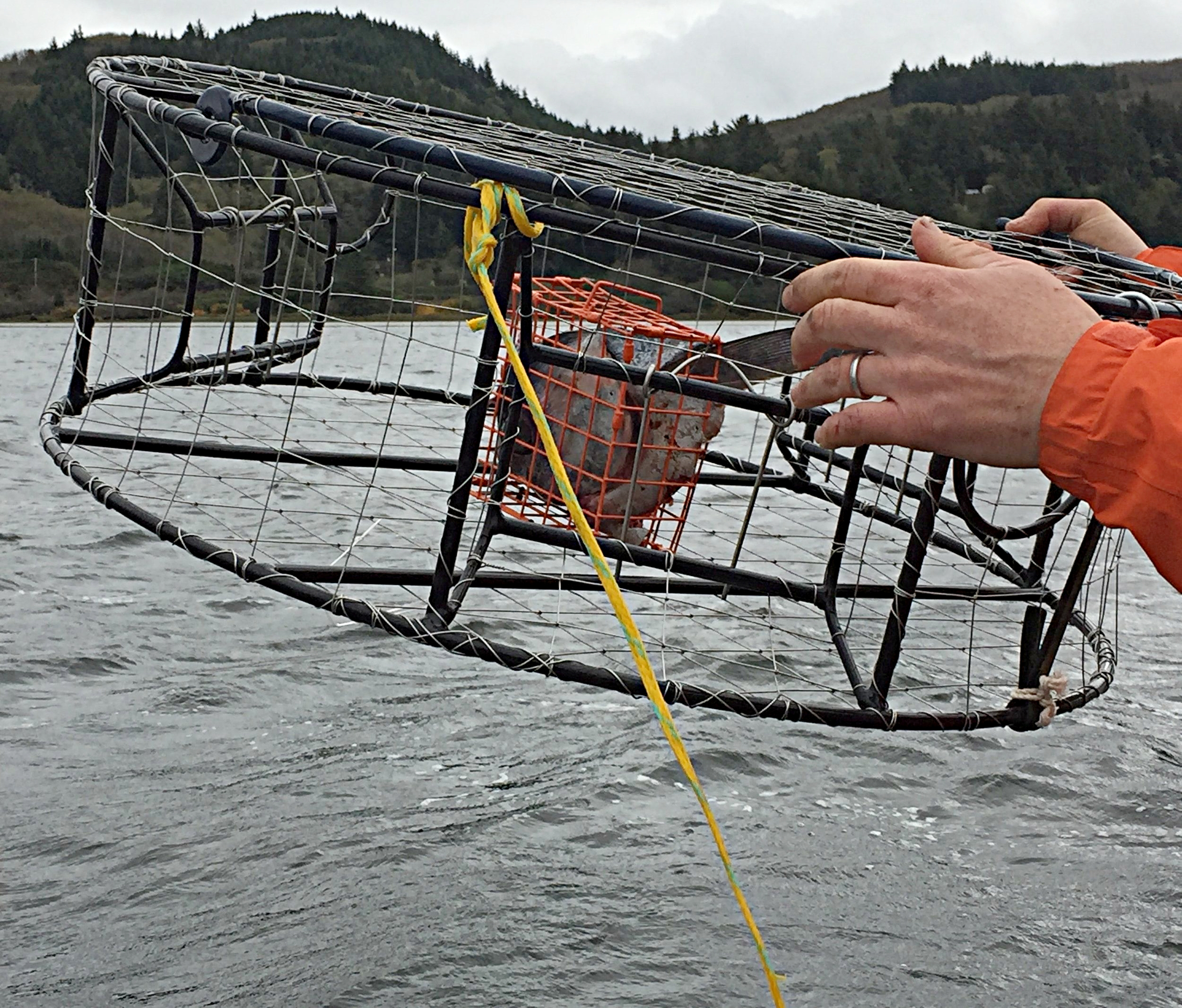 Crab pot being tossed into the bay