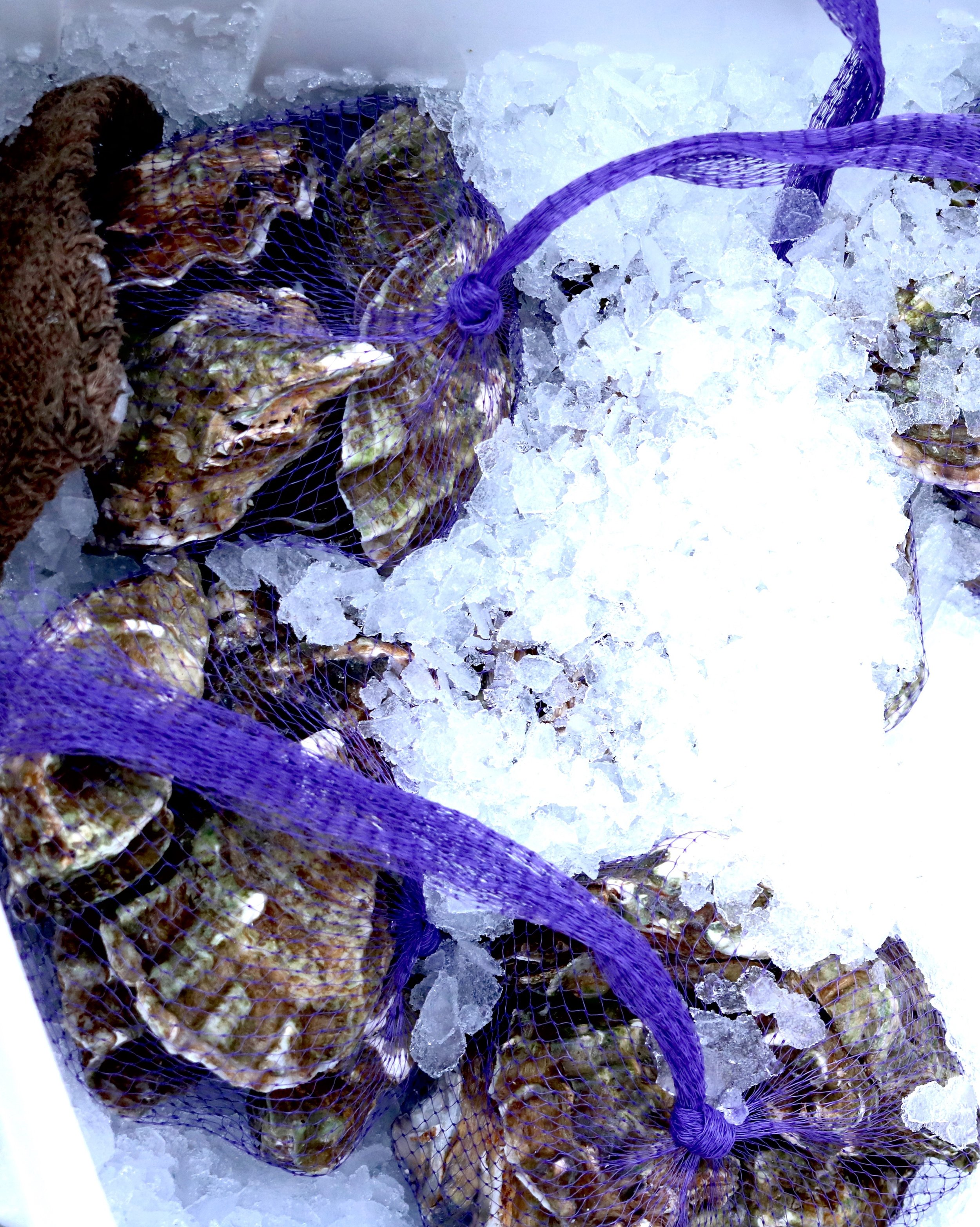 Willapa Bay oysters netted on ice from Linda Brand Seafoods at the Portland Farmers Market