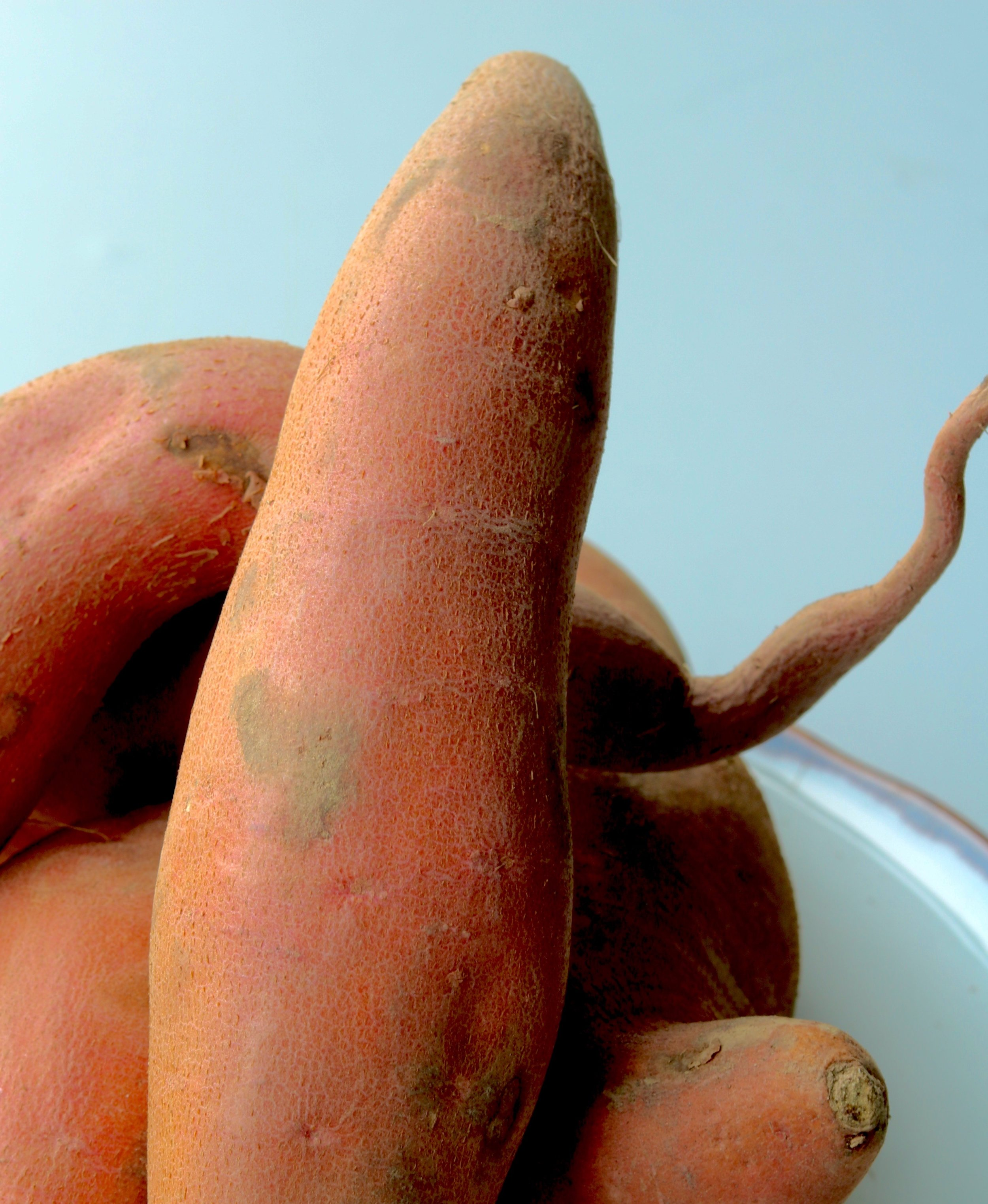 Yams, growing in all directions