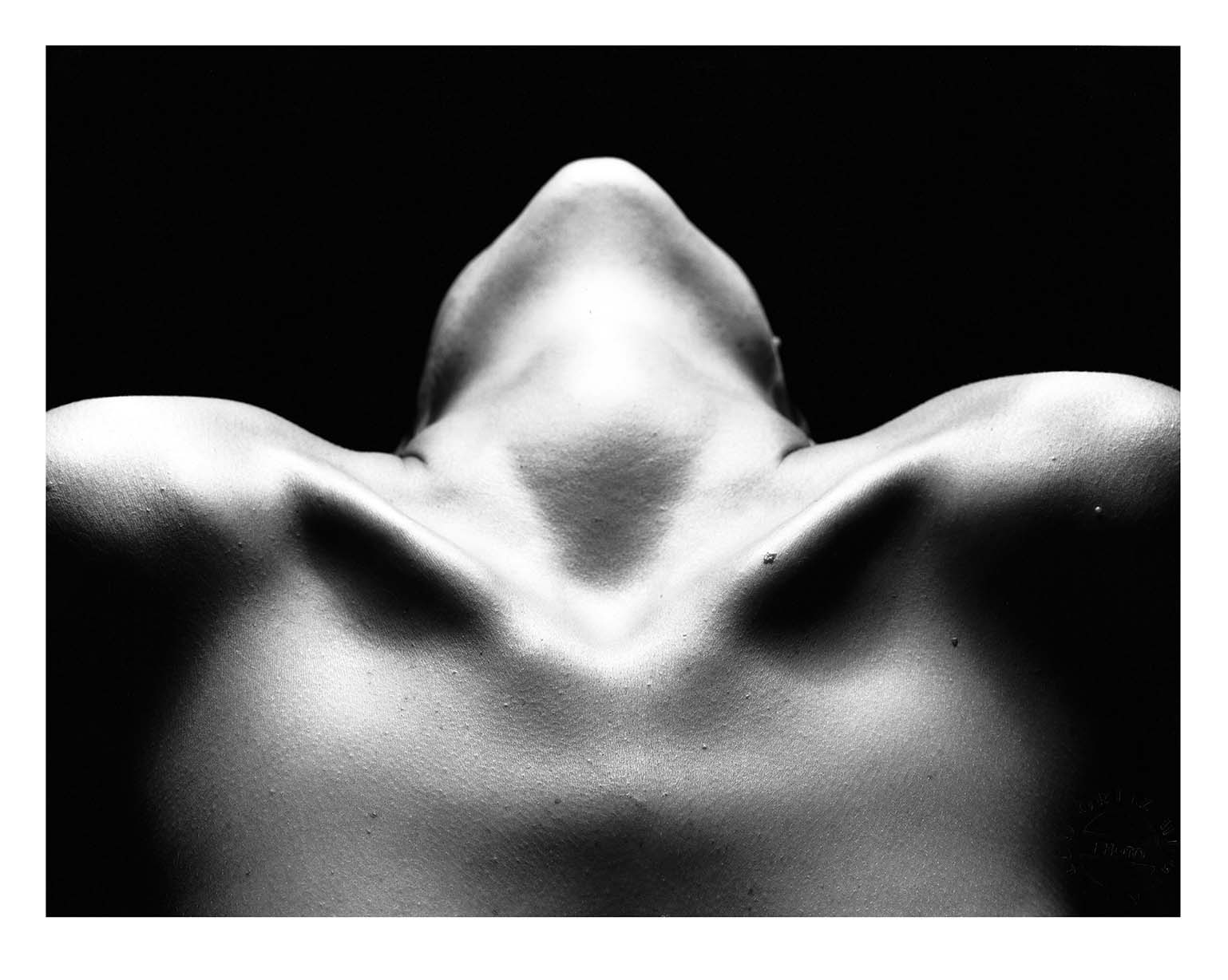 Clavicles, Silver Gelatin Print, Various Sizes