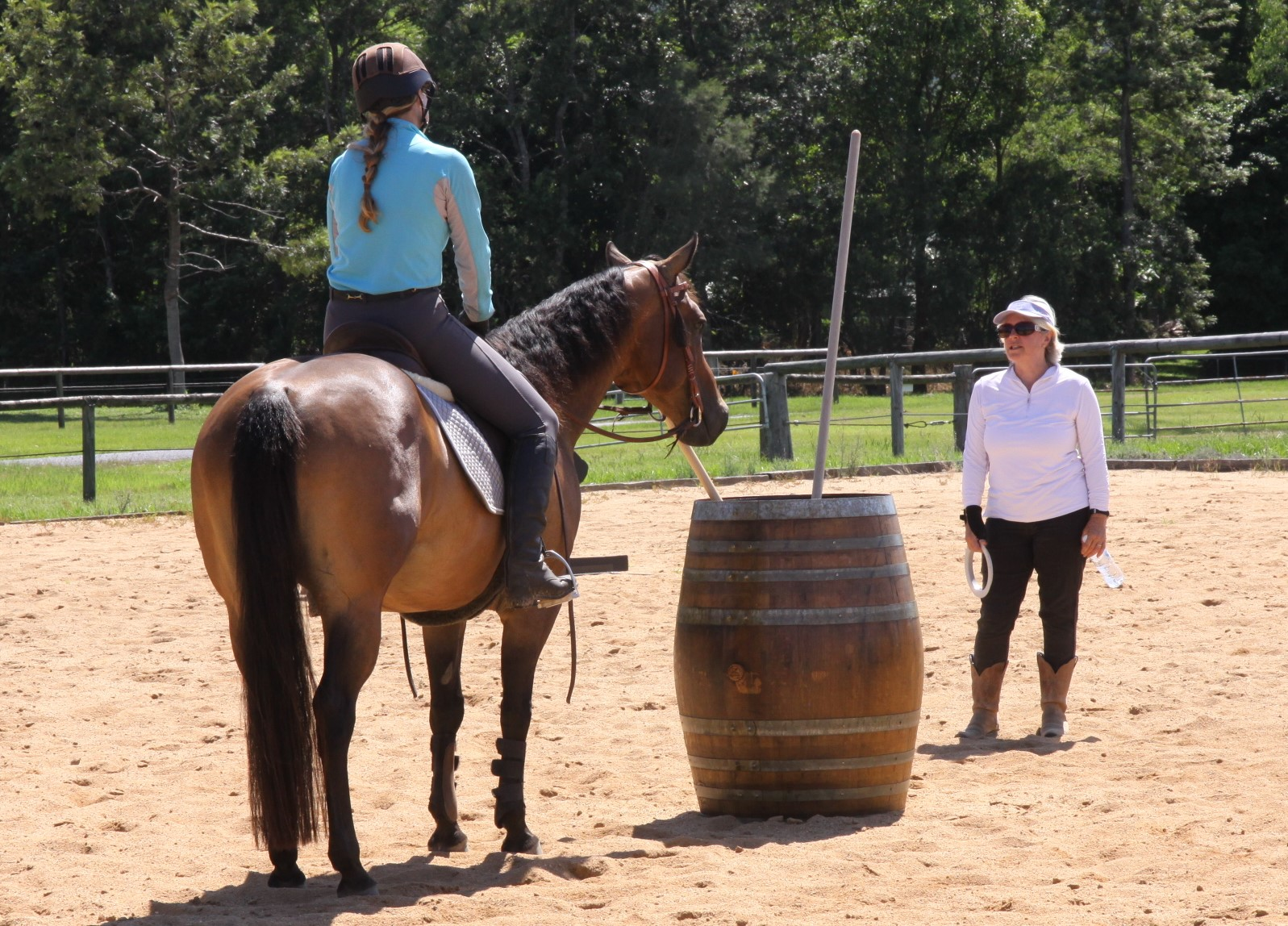 The Four Phases - + Dressage+ Ease of Handling+ Speed+ Cattle