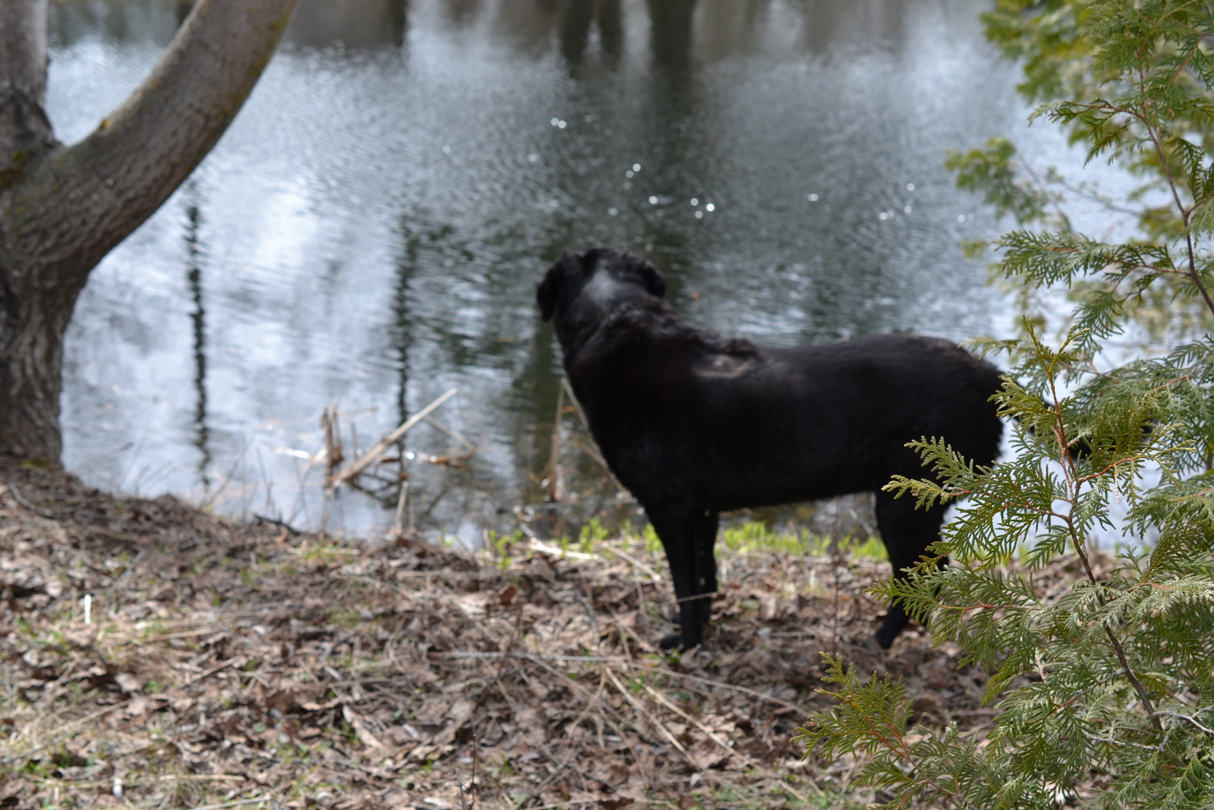 Lucy is our river expert as she does most of the stick retrieving and general splashing around