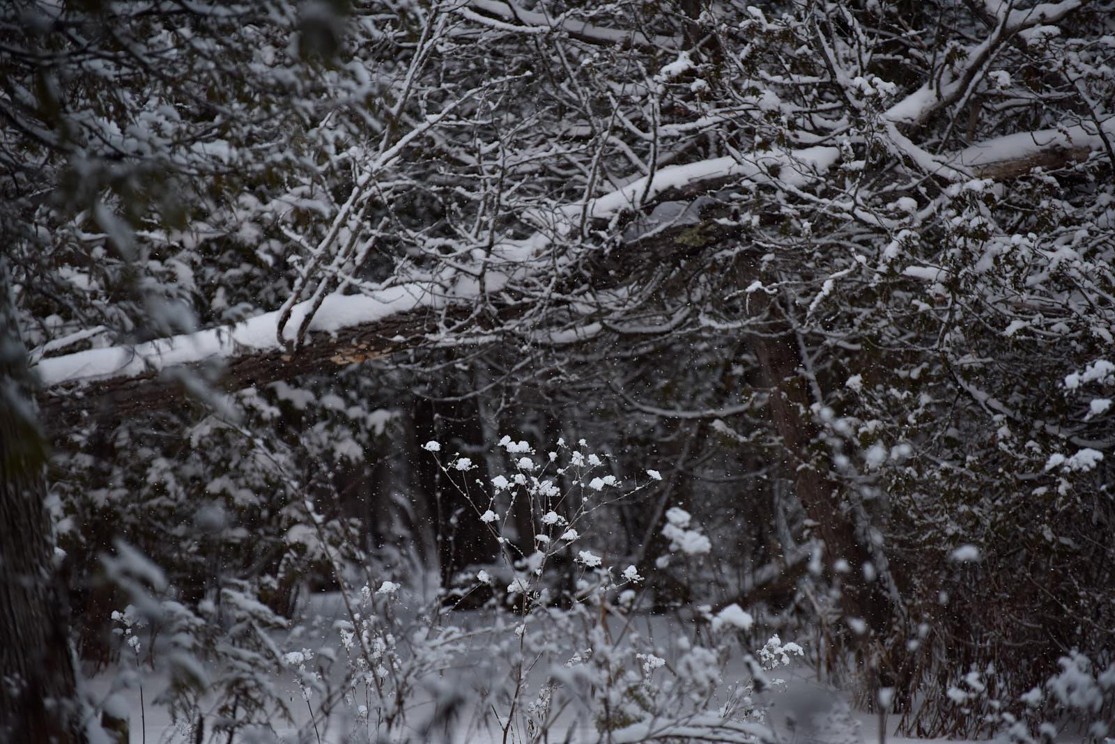 winter and things.Jan.18 60.jpg