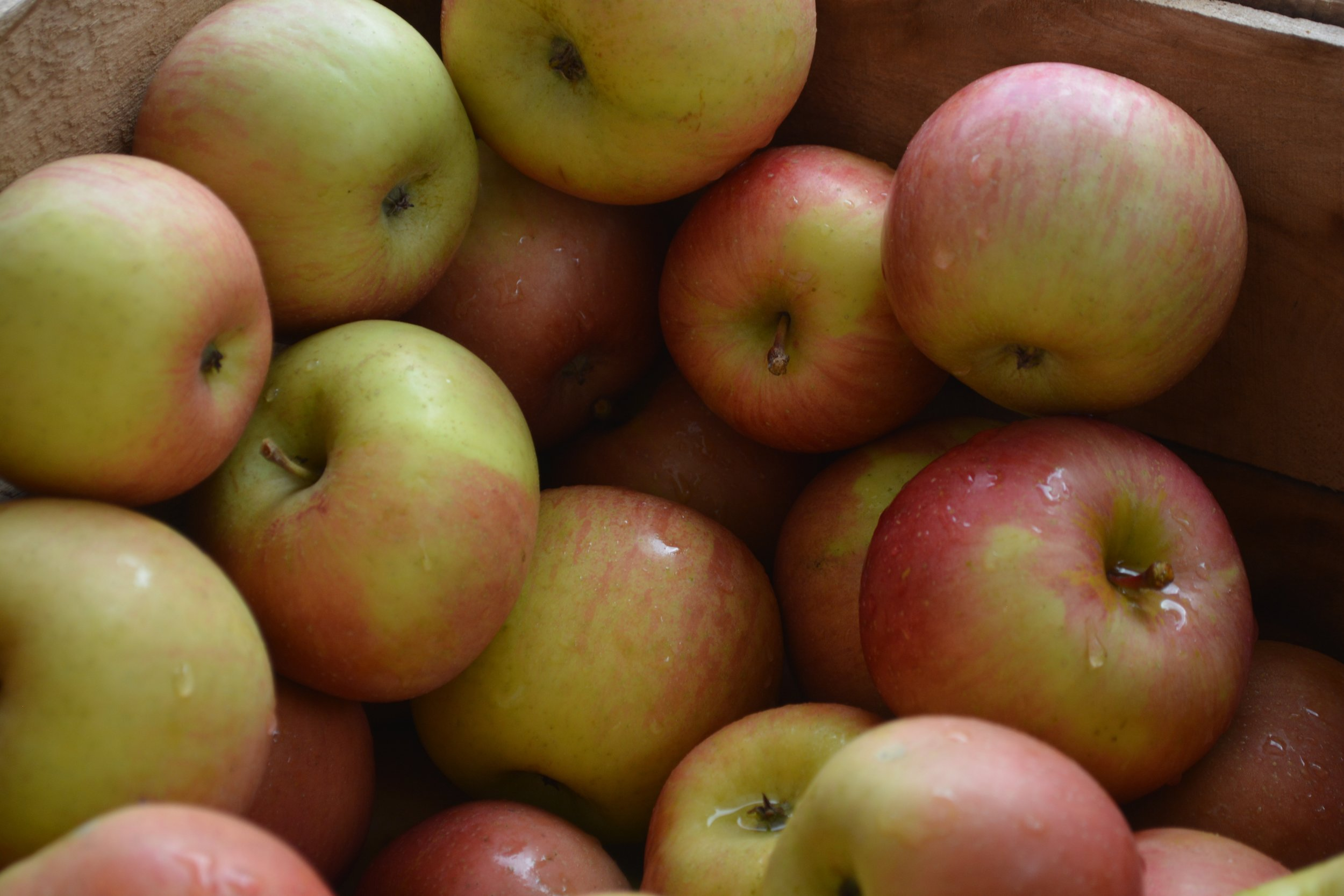 apple -1.jpg