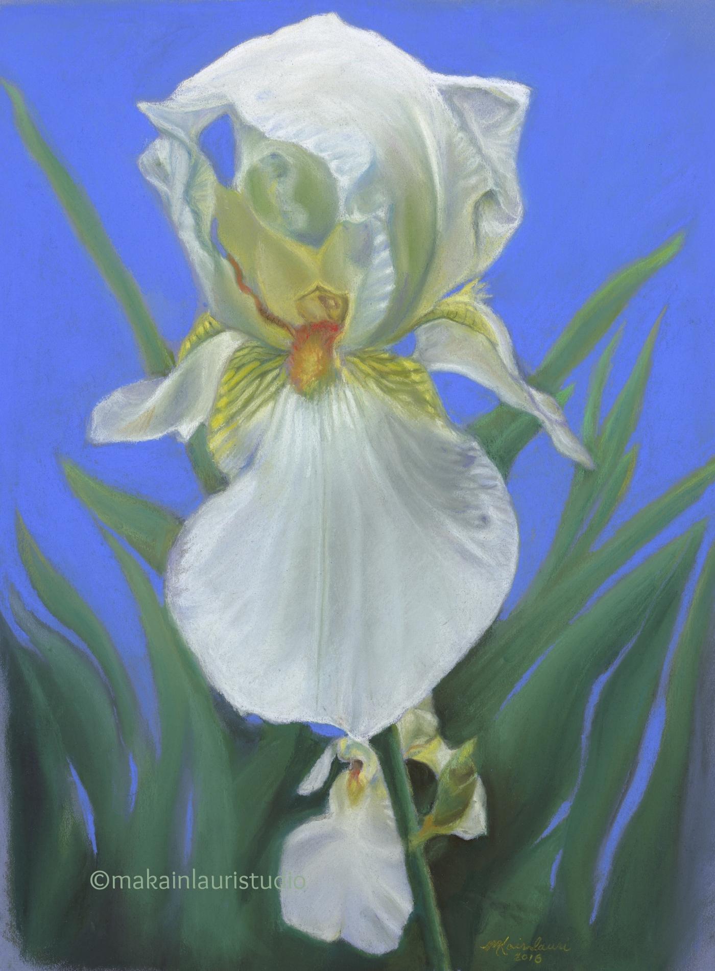 Splendor in White