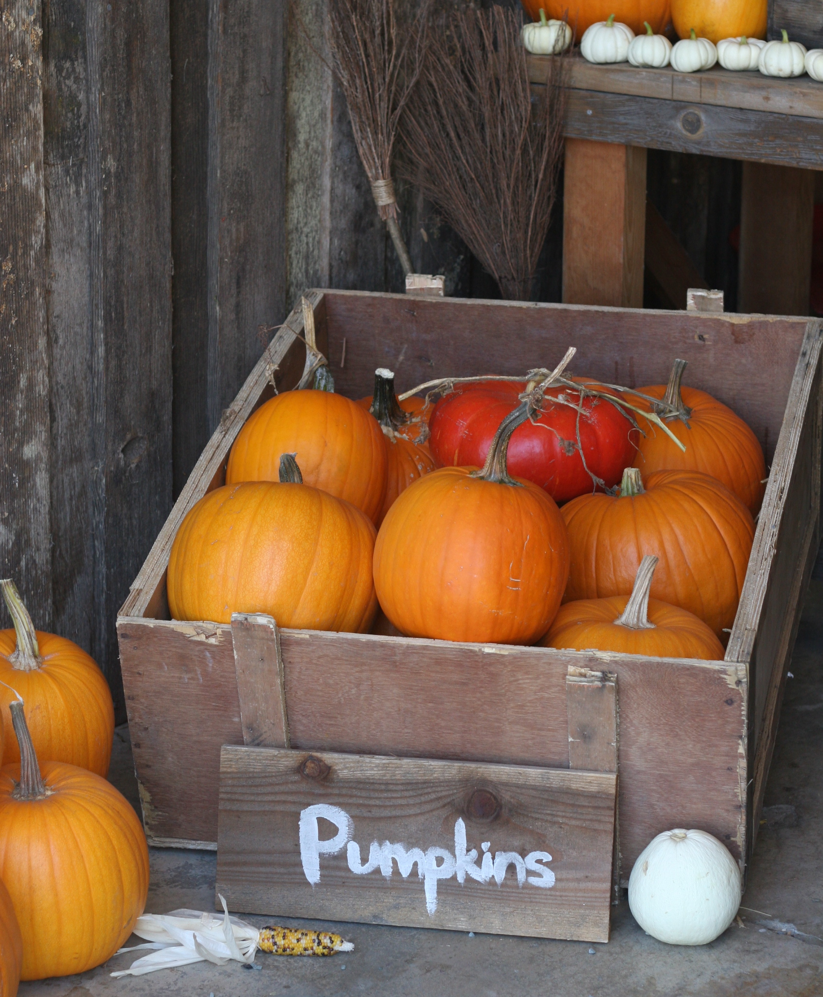 Sonoma Broadway Farms - Pumpkin Patch.jpg