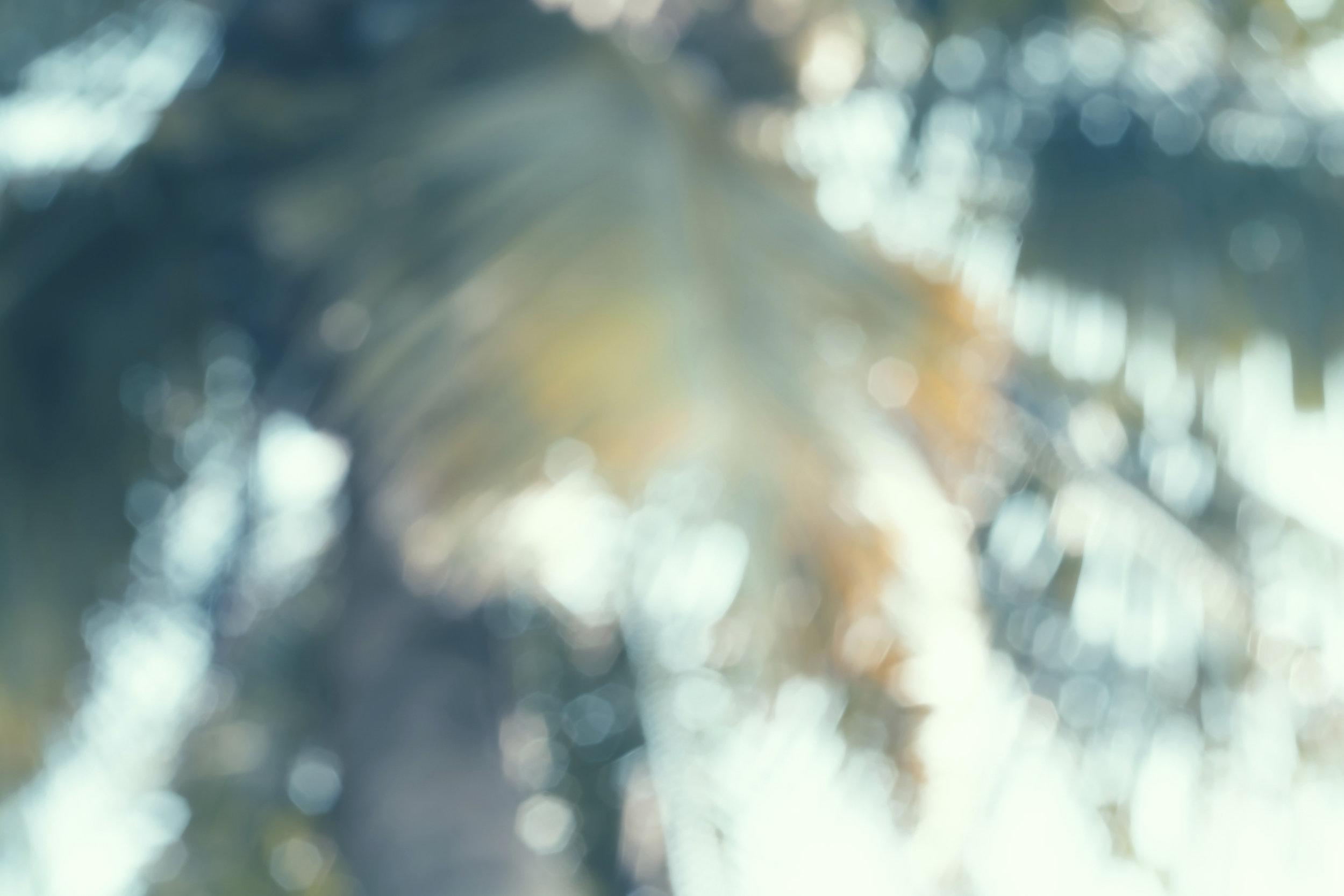 palmsblurry.jpg