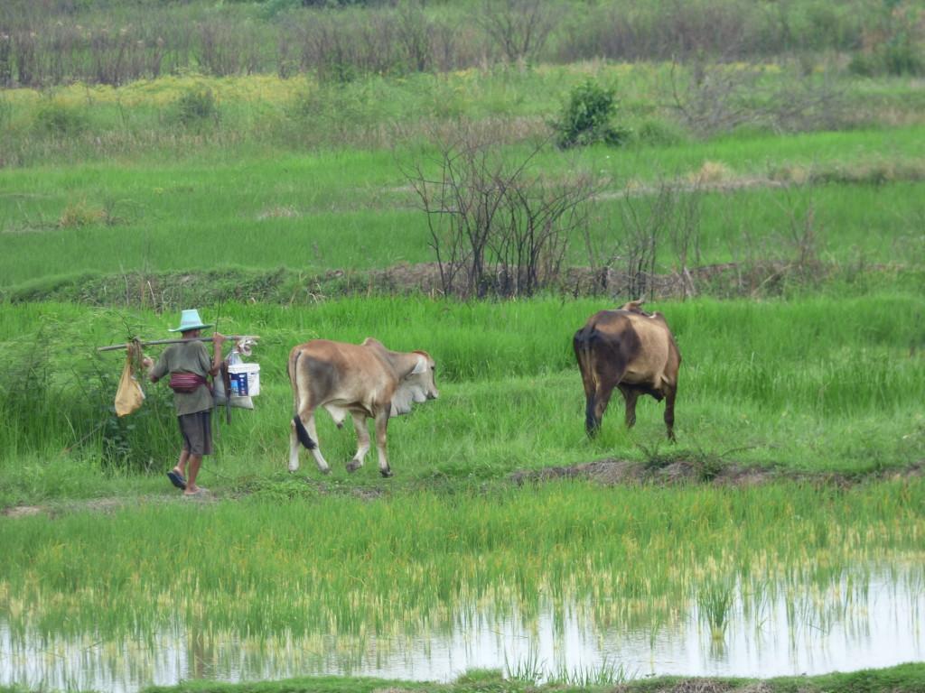 Cattlephoto