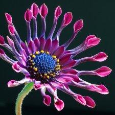 flower-pic.jpg