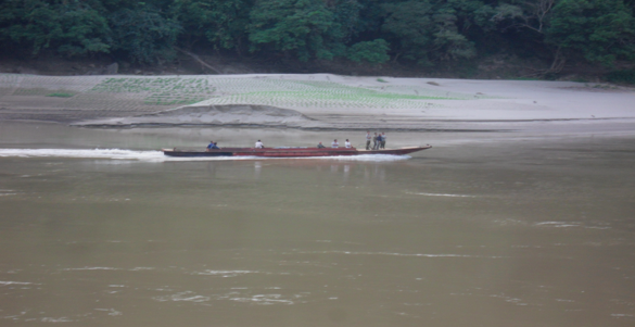 Figure 1 Cultivation on alluvial land at Wan Hsala Village on the Salween River bank