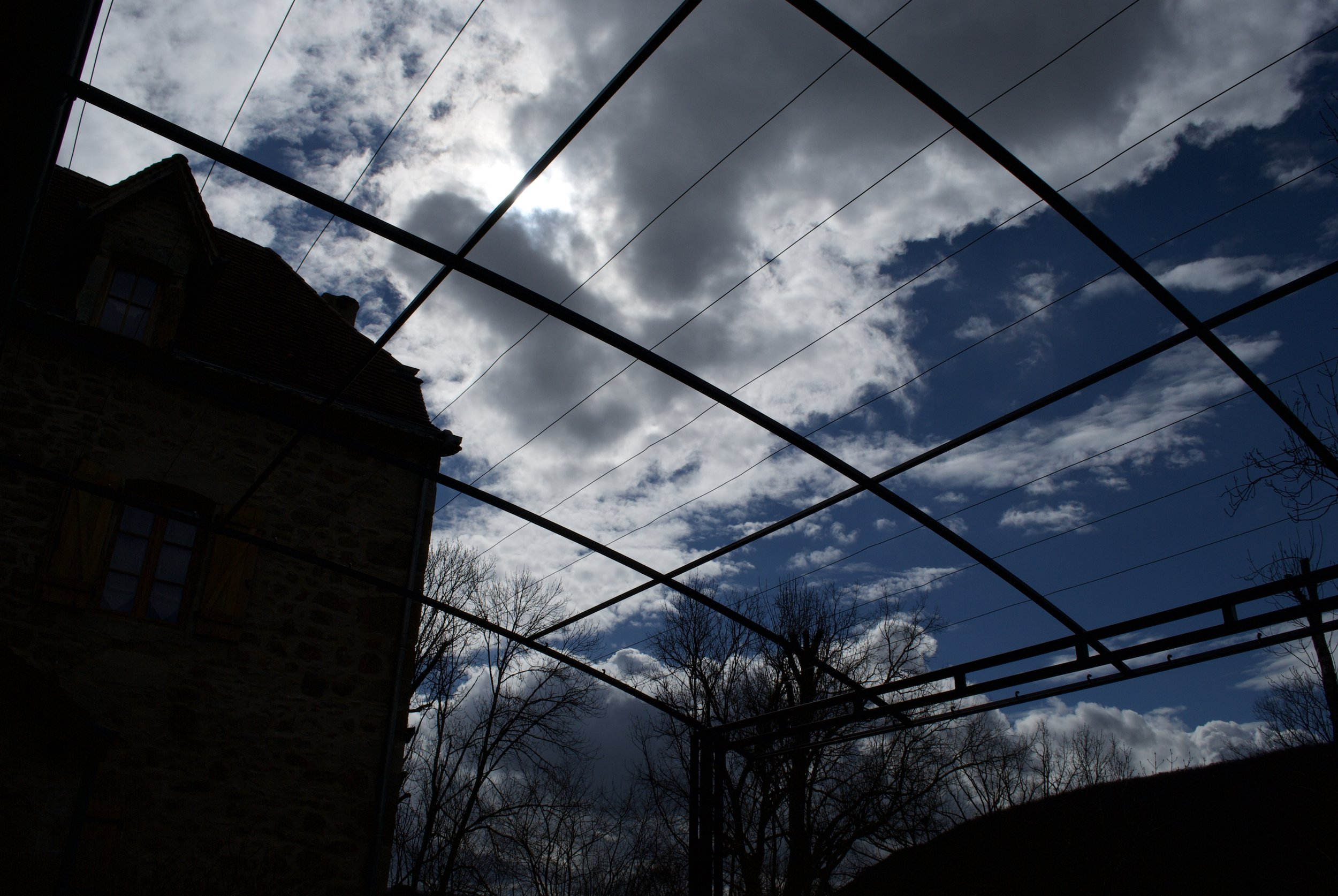 A view of the winter sky through the curving roof of the skeleton framework of the same pergola.